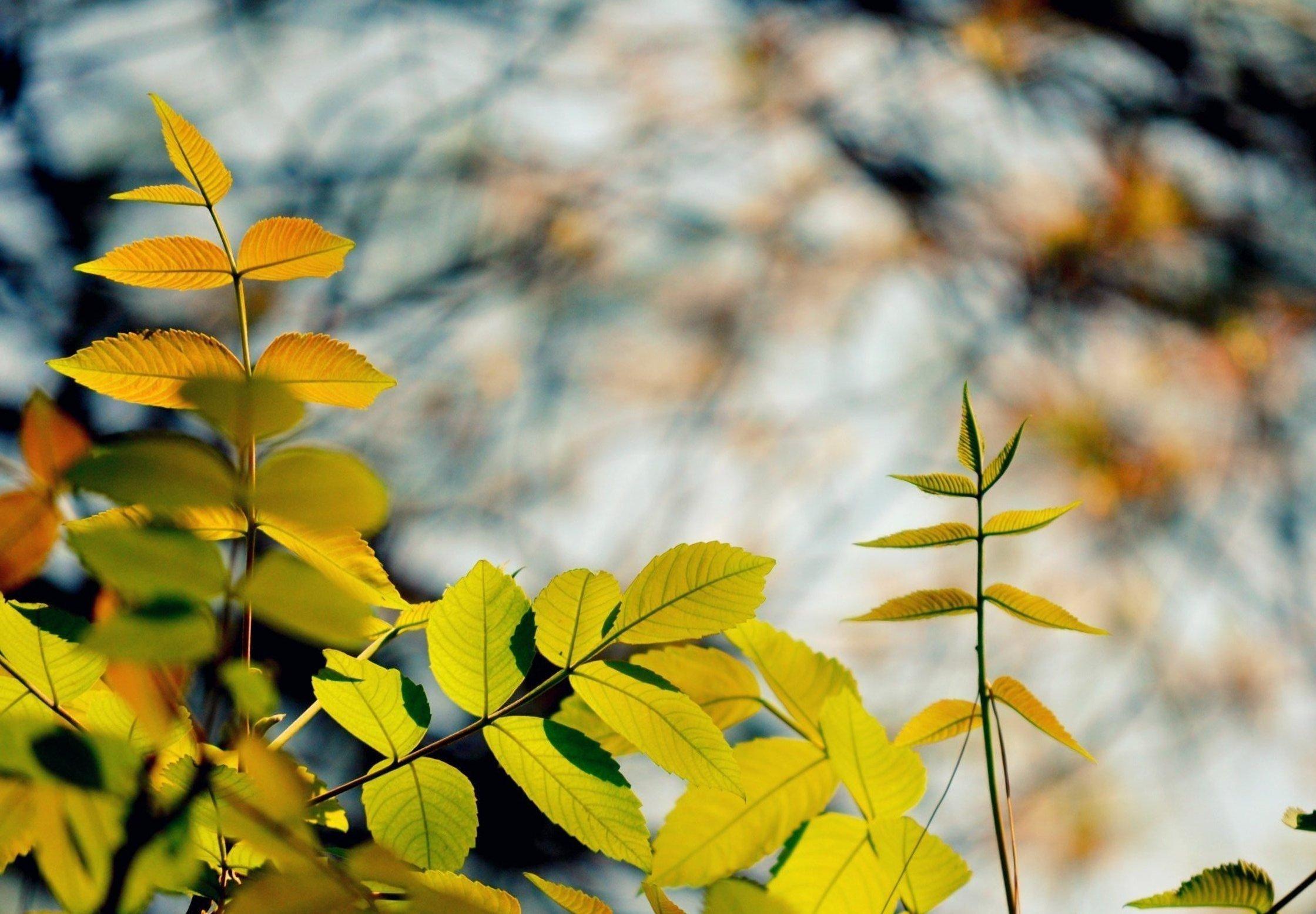 листья ветка фон  № 3219020 без смс