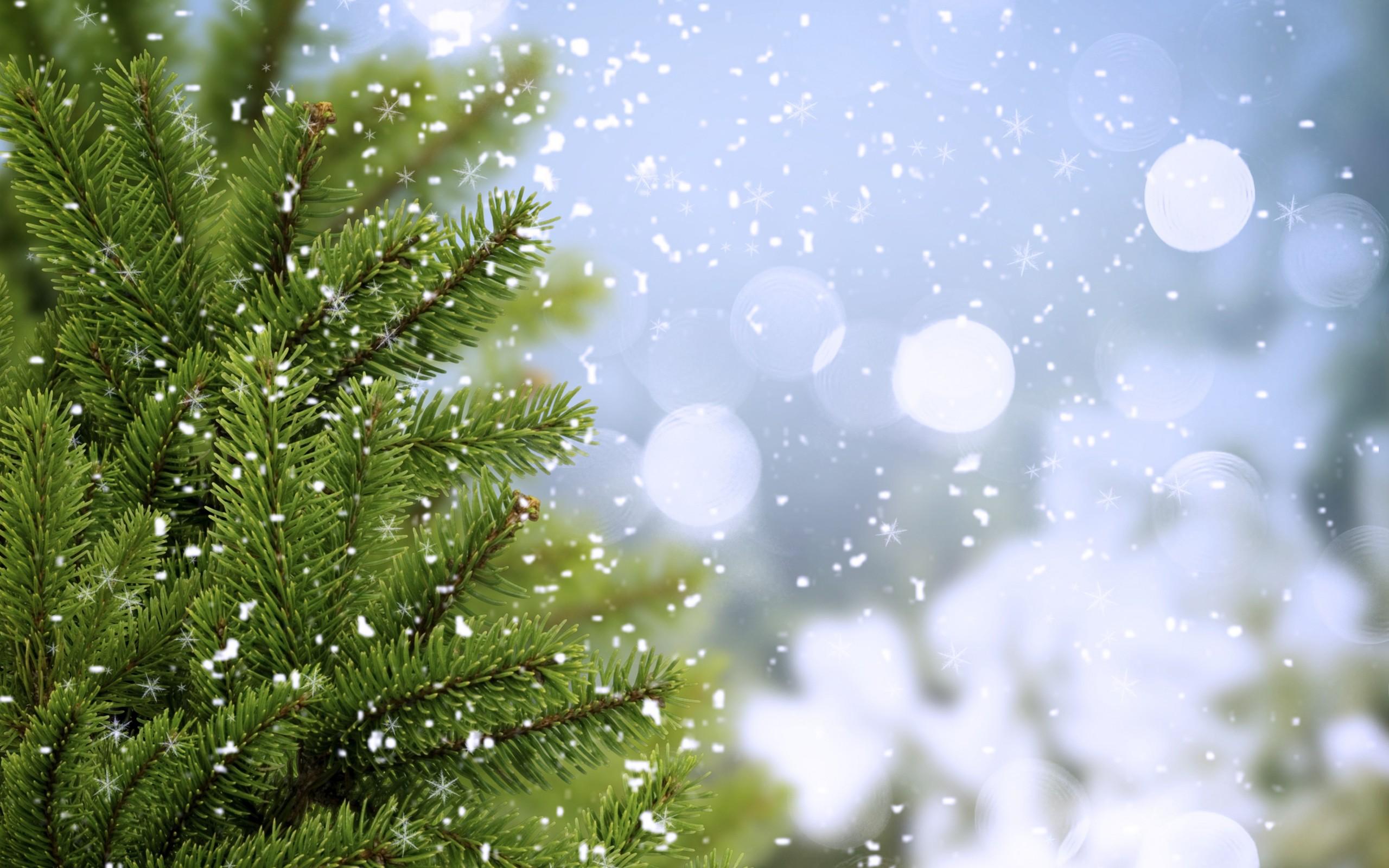снег ели зима  № 3180868 без смс