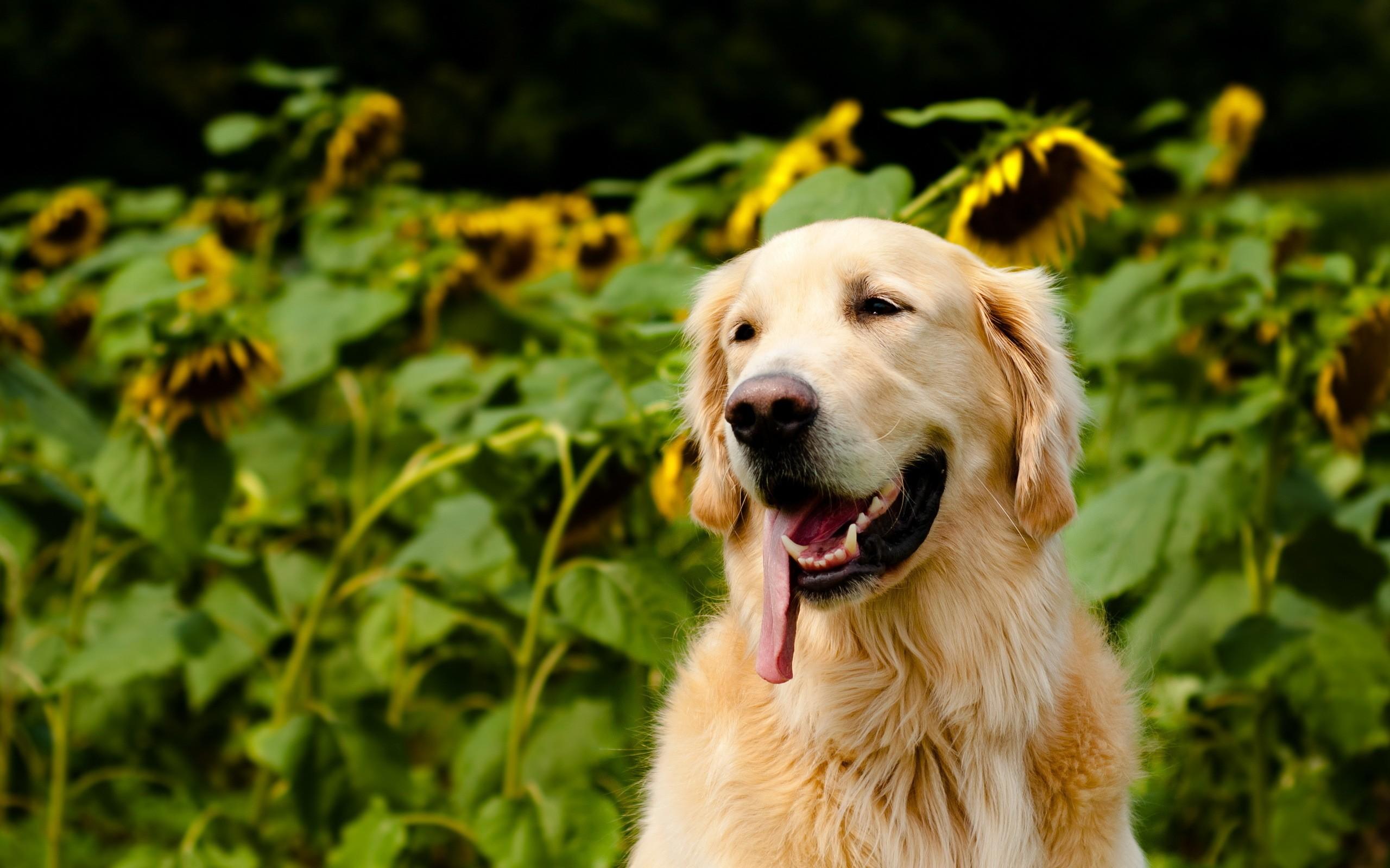 собака животное природа  № 690844 бесплатно