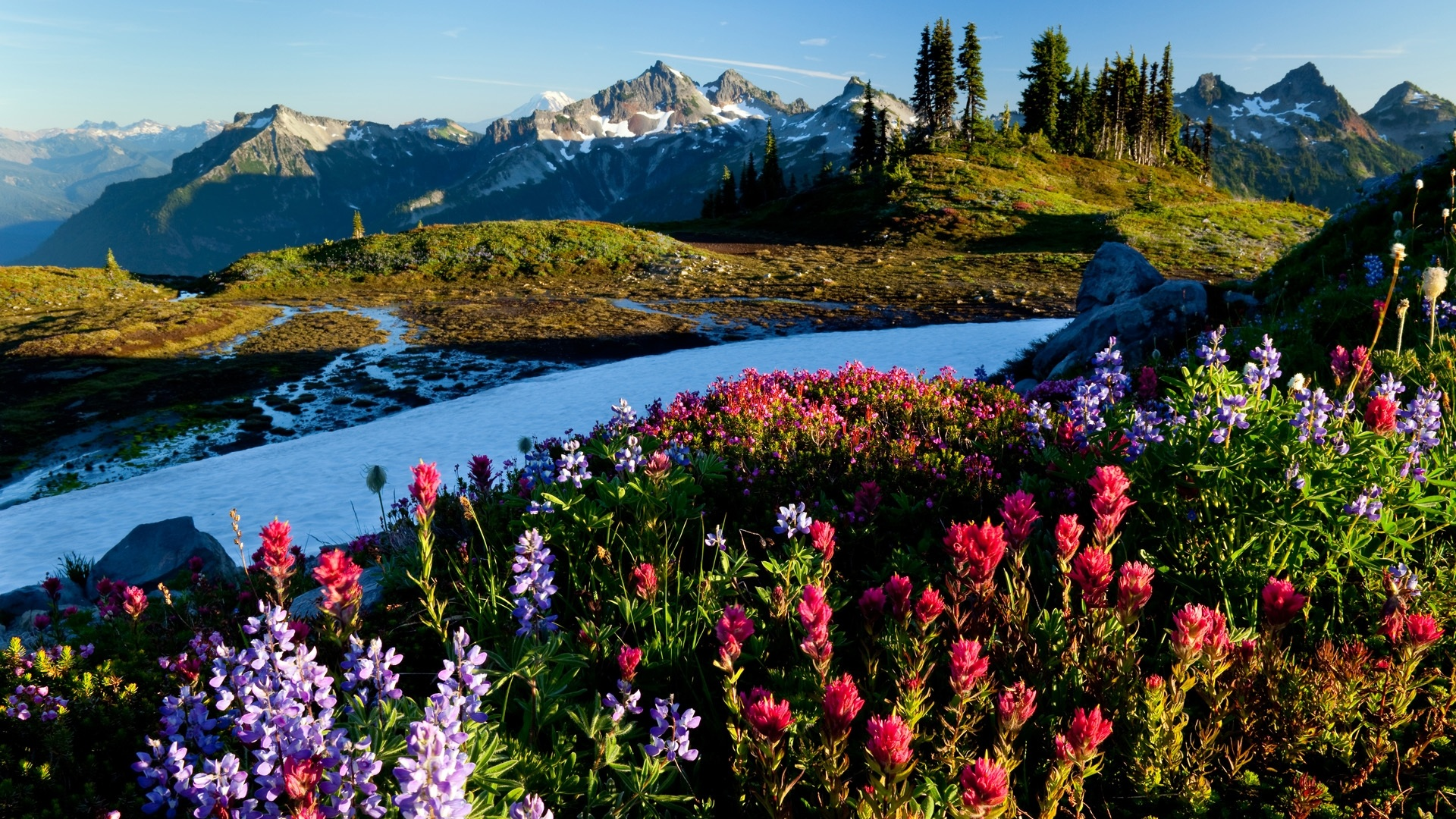 природа цветы nature flowers скачать