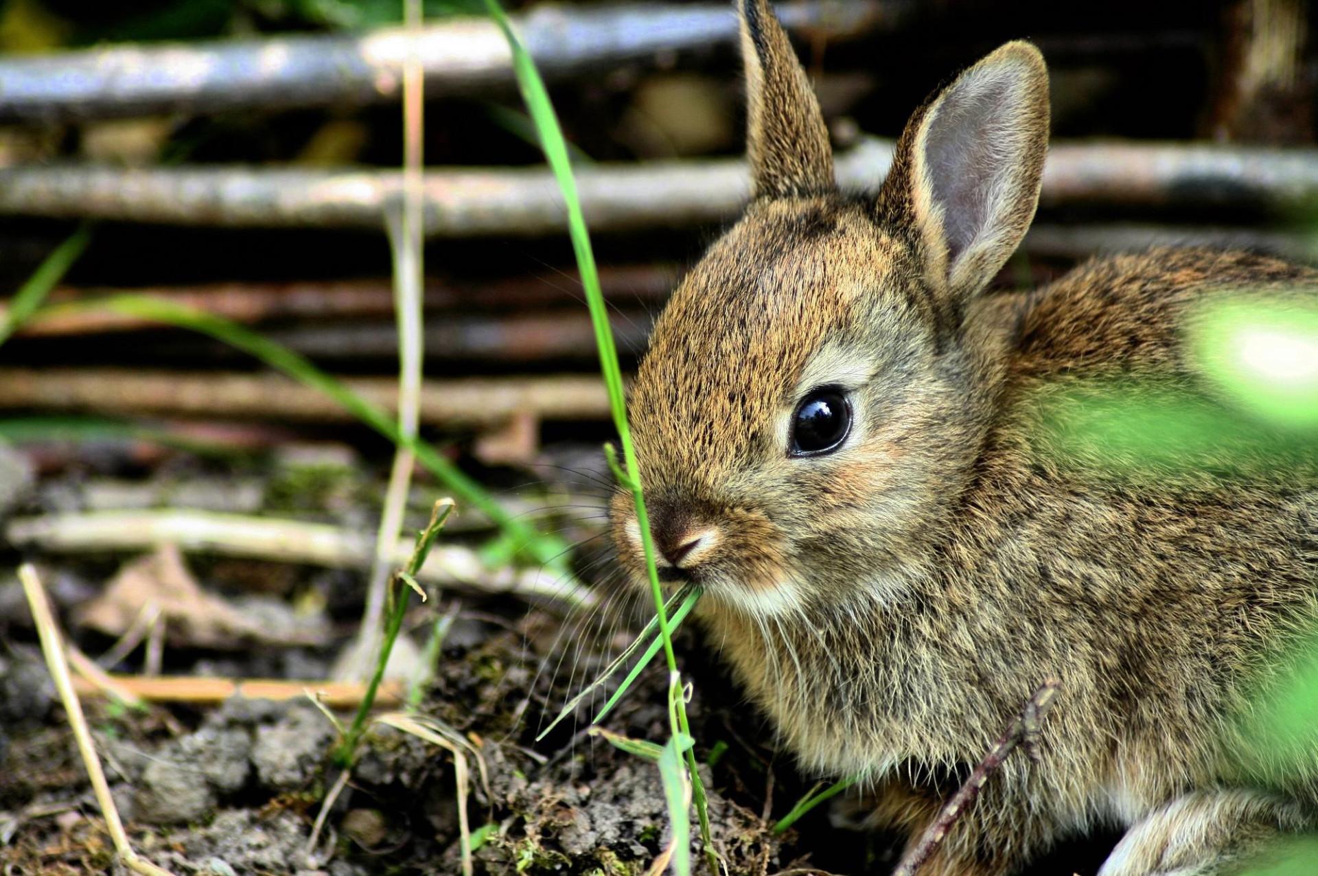 кролик трава  № 1964065 загрузить