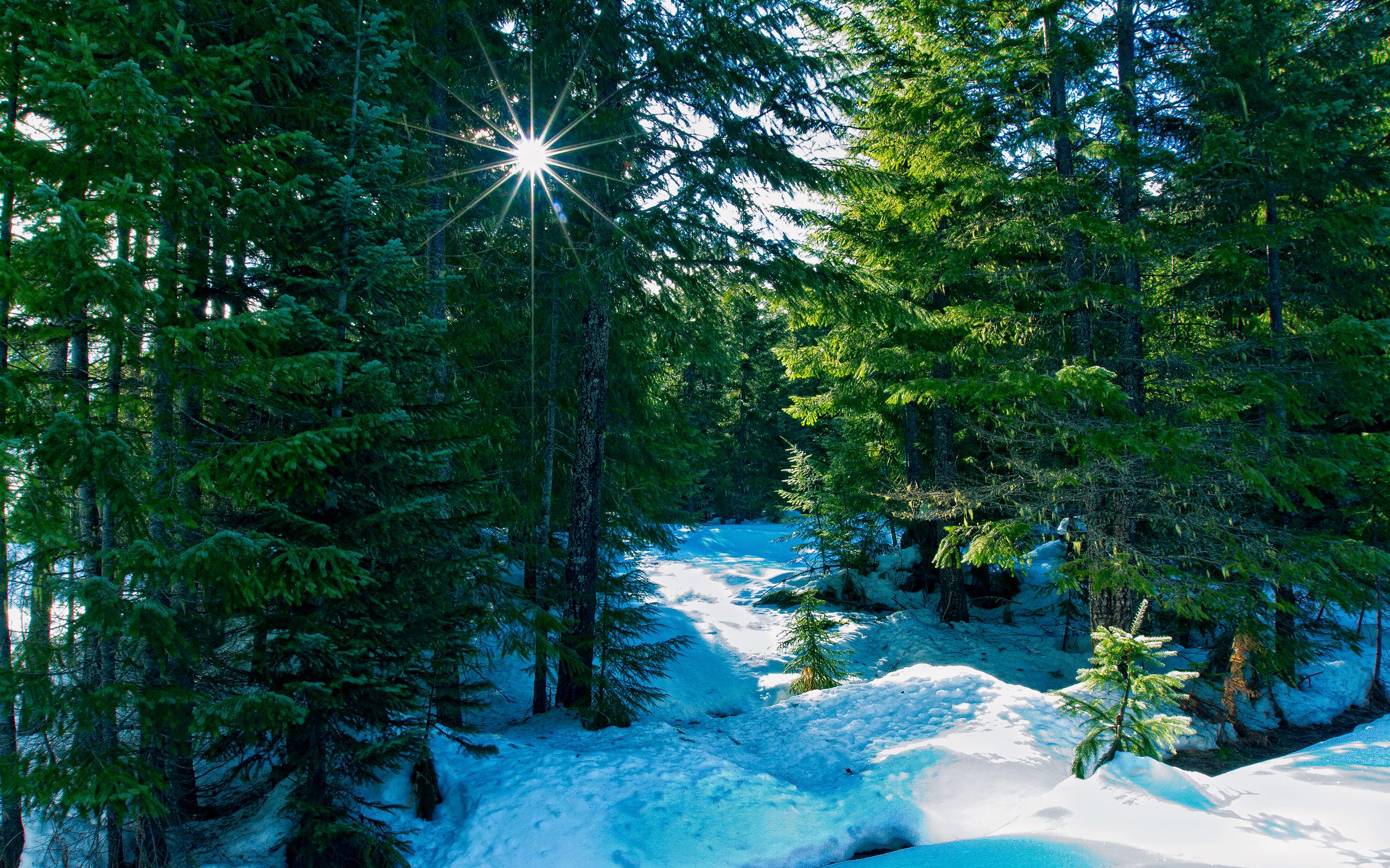 зимний солнечный лес  № 310367 загрузить