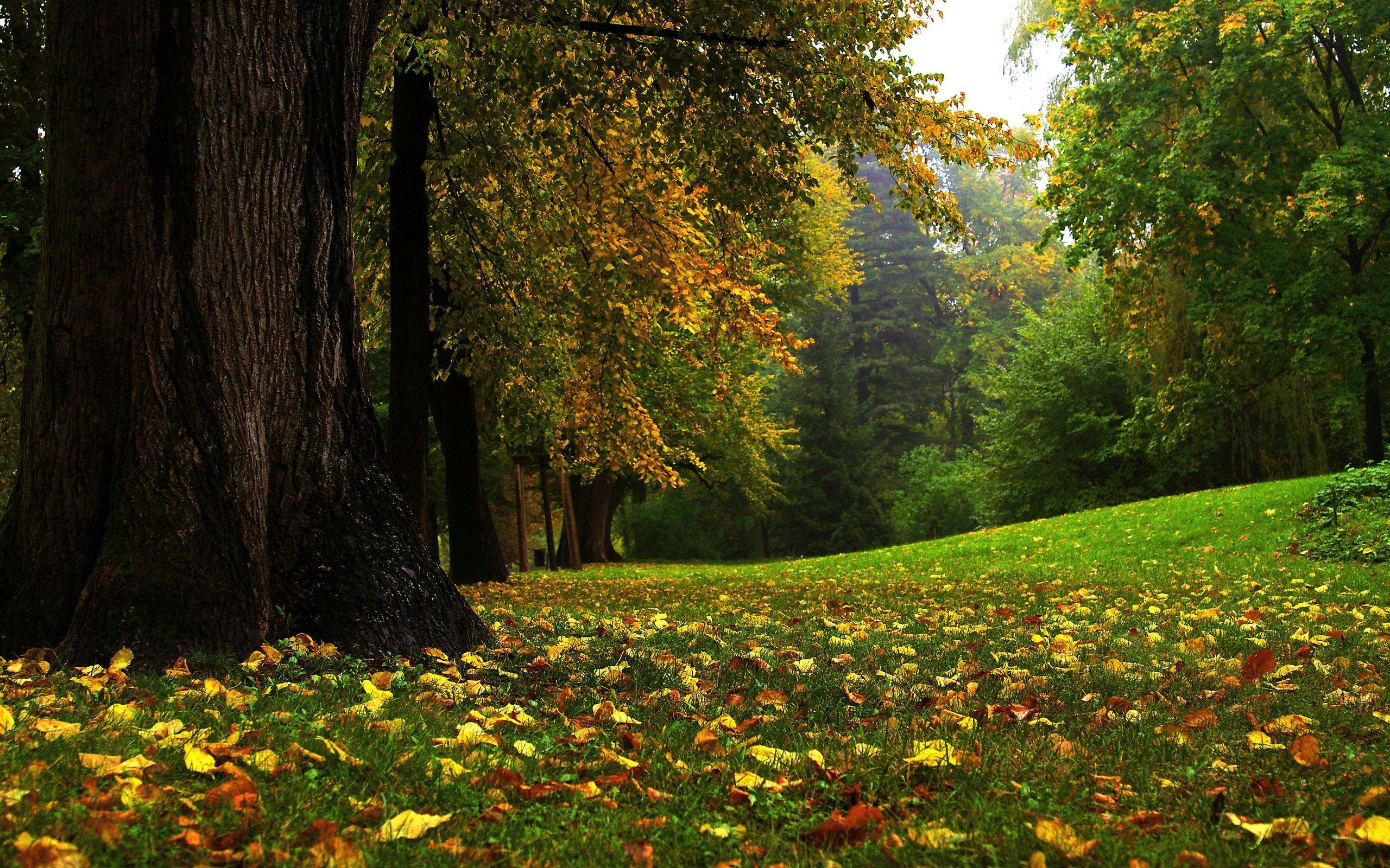 Осень листва лес загрузить