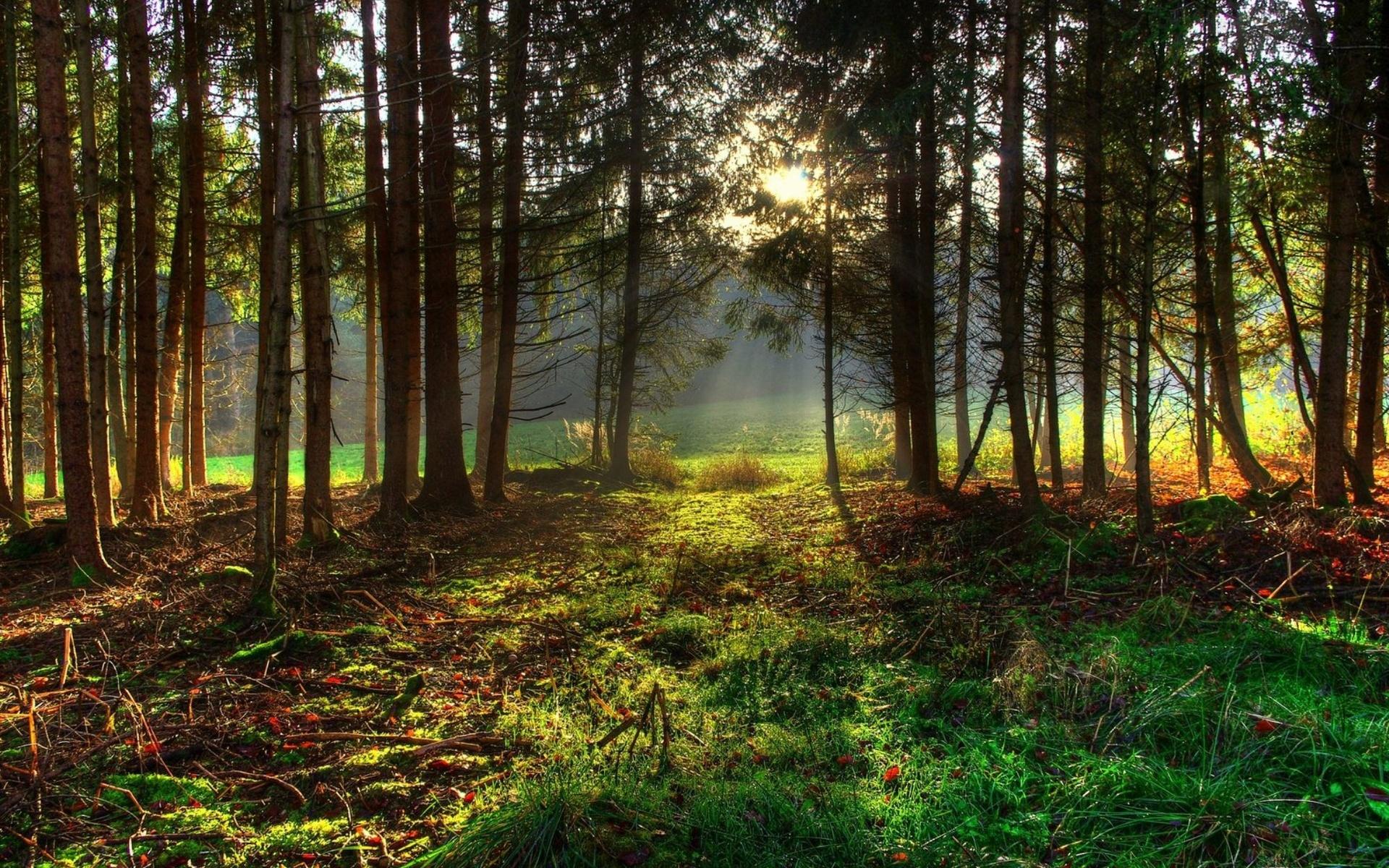 Подруге, картинка с лесом для фотошопа