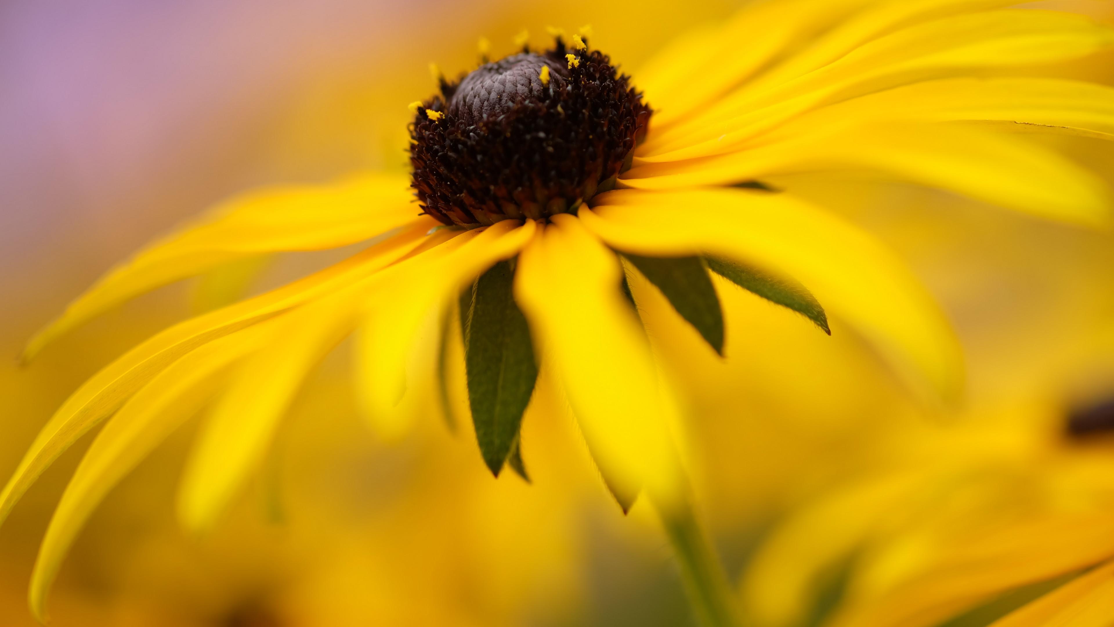 природа желтый цветы смотреть