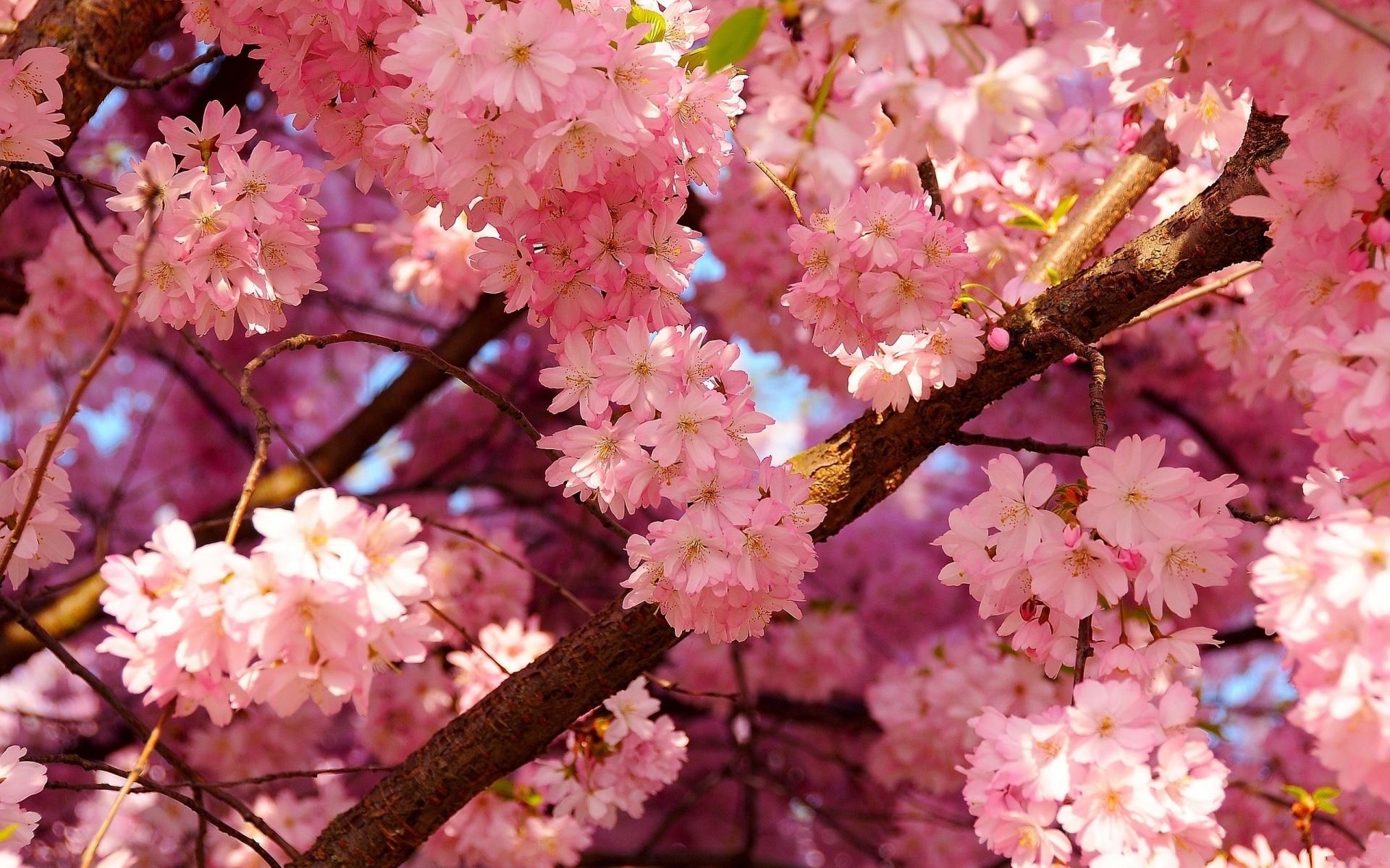 Картинка на рабочий стол природа цветы, открытка