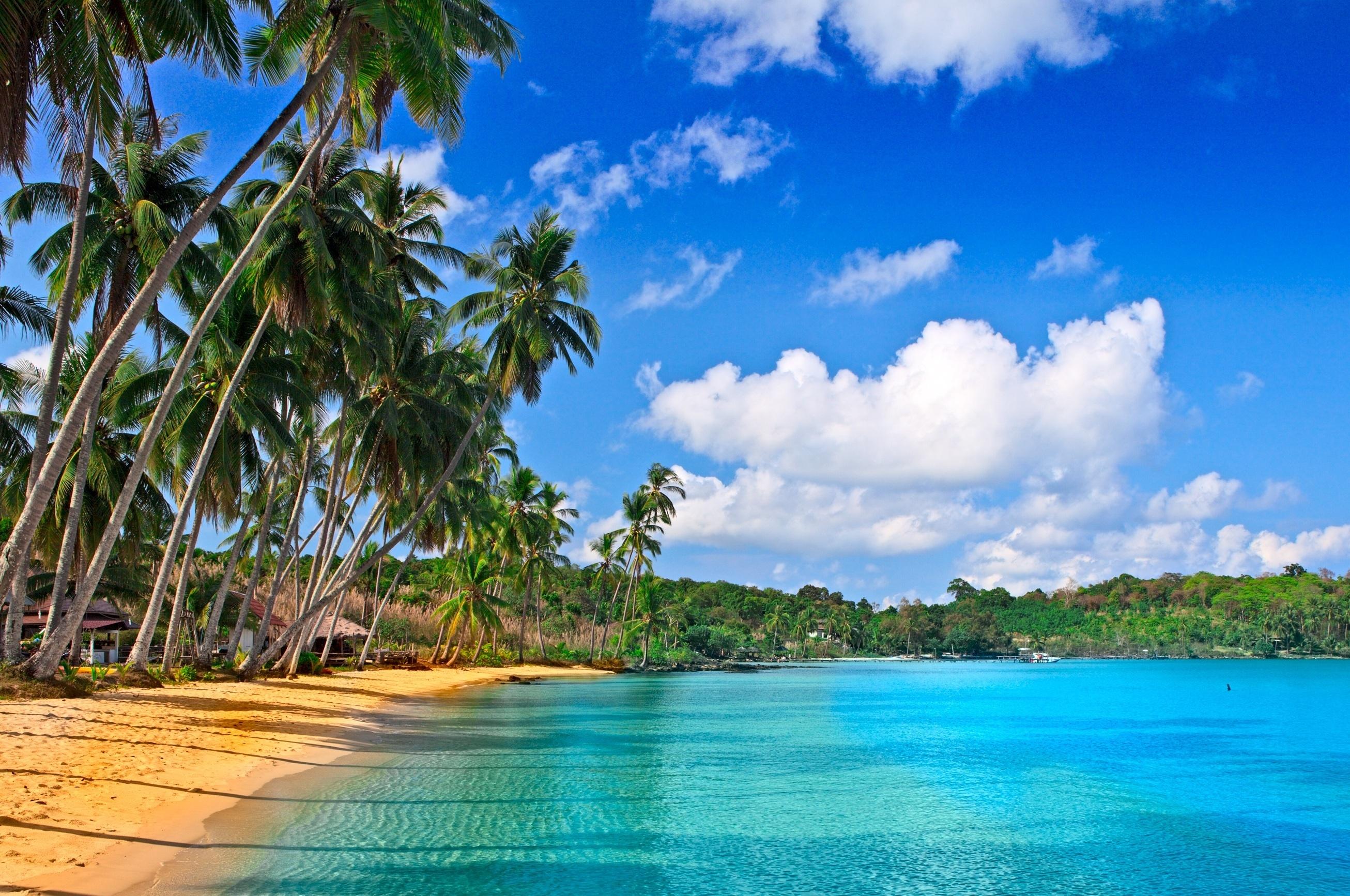 Море песок пляж пальмы  № 3897955 бесплатно