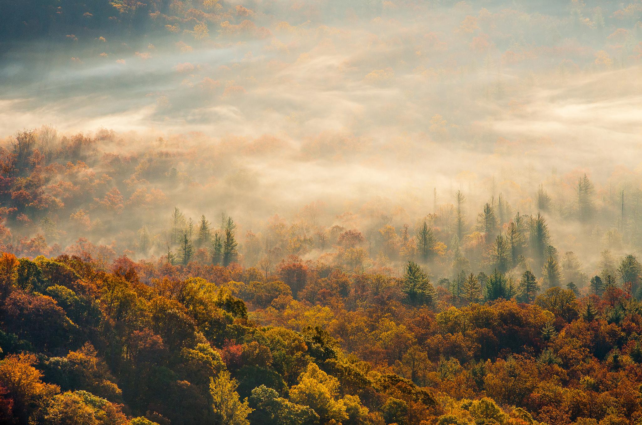 туманный лес скачать