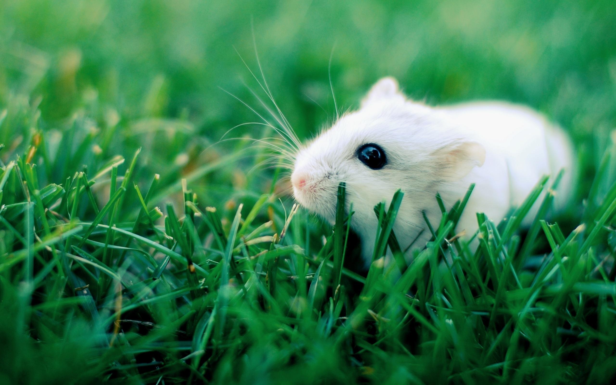 Зверек в траве скачать