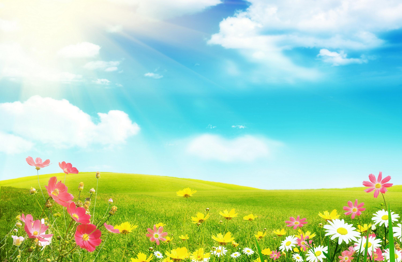 Картинки поле с цветами для детей, жизнь картинках прикольные