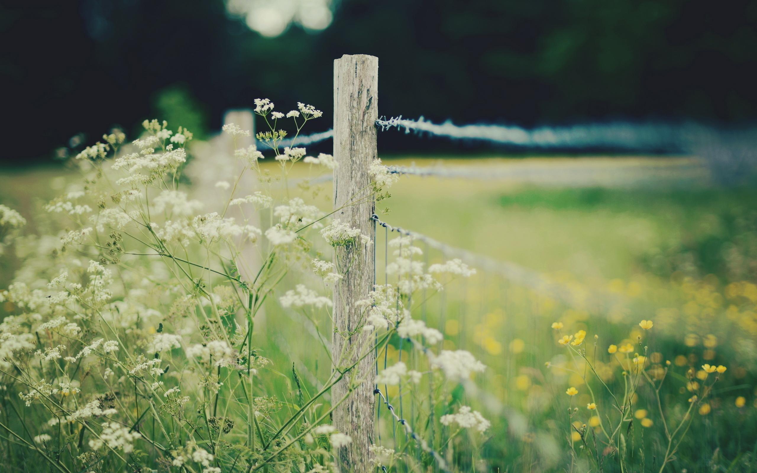 Зеленое поле, забор скачать