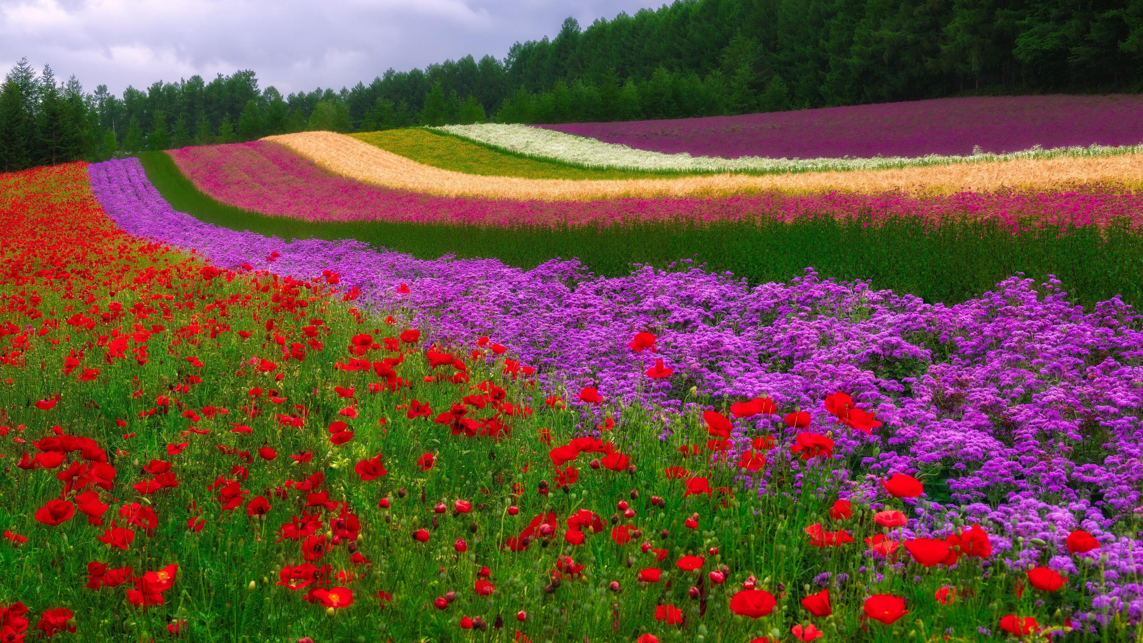 красочная поляна загрузить