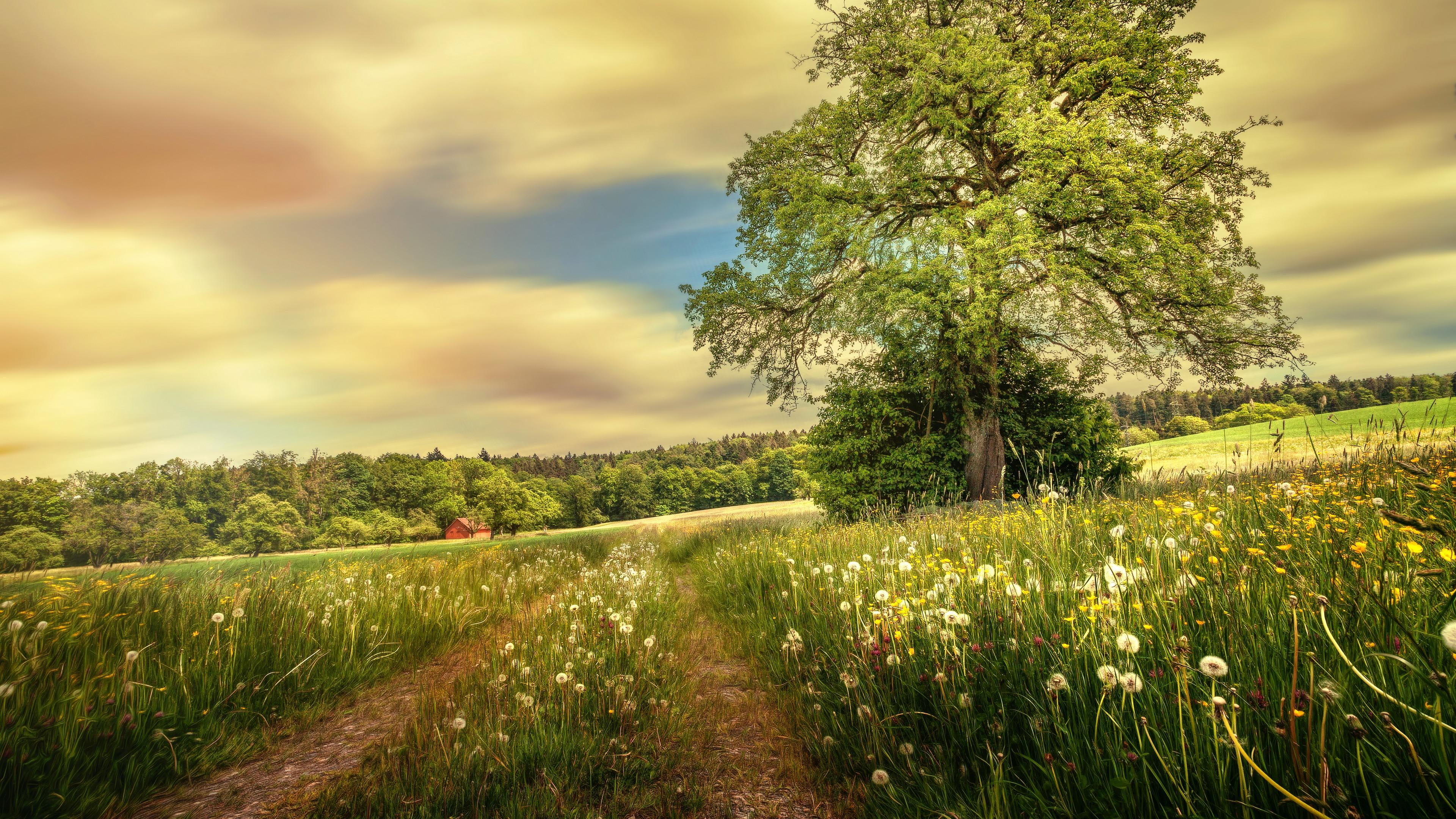 Трава вдоль тропки без смс