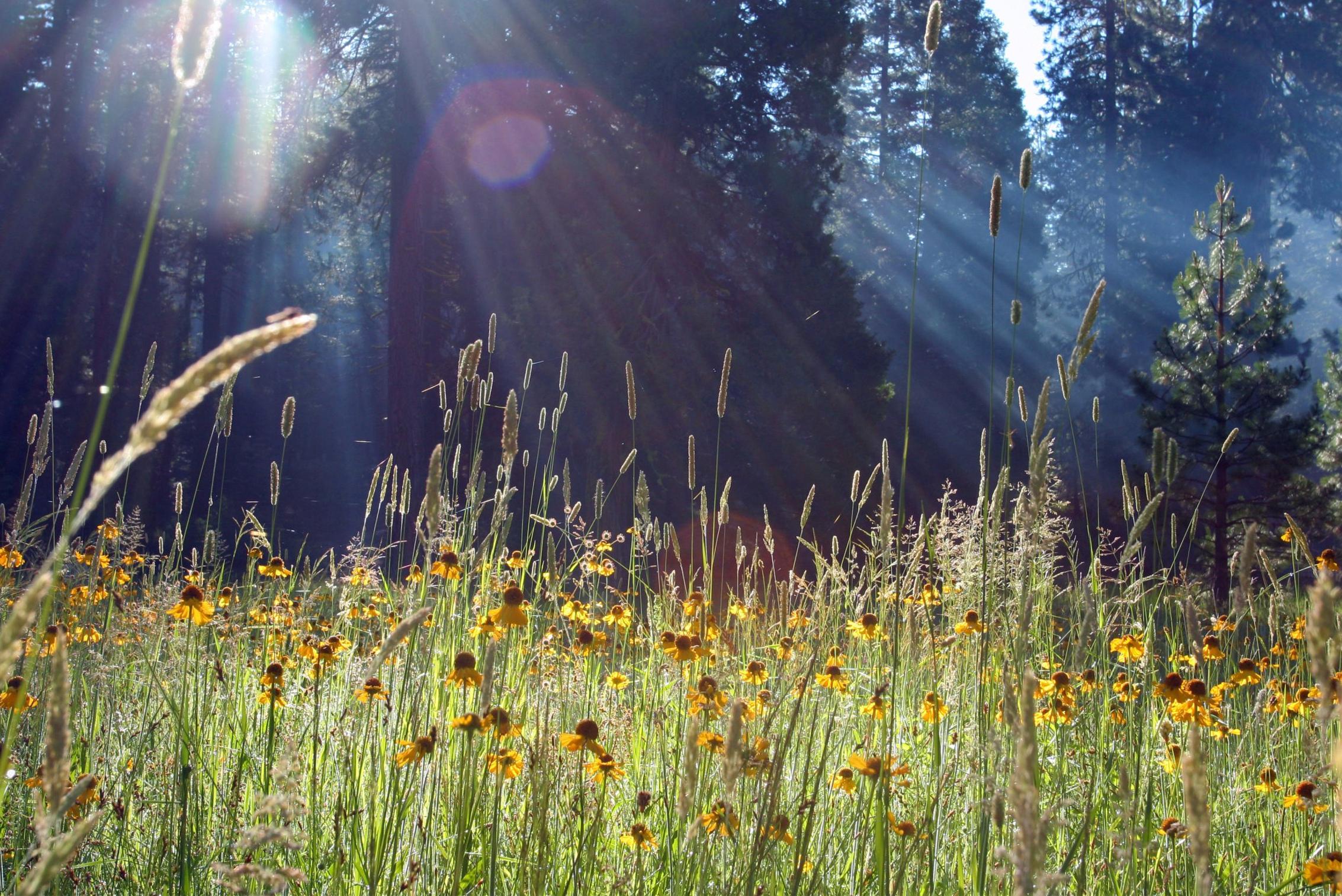 зеленые колосья цветы поляна  № 3213854 без смс