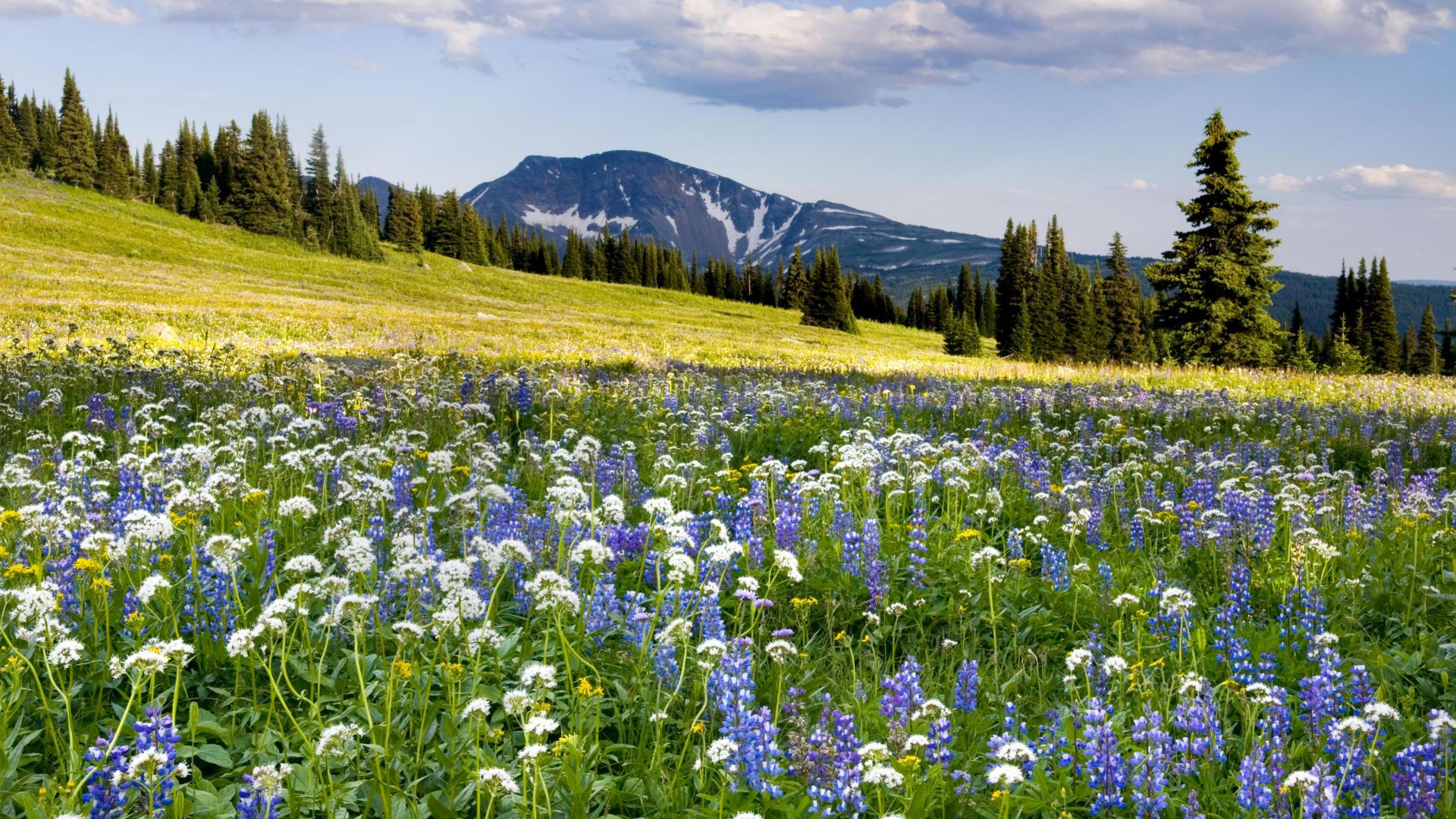 Днем, картинки с поляной цветов