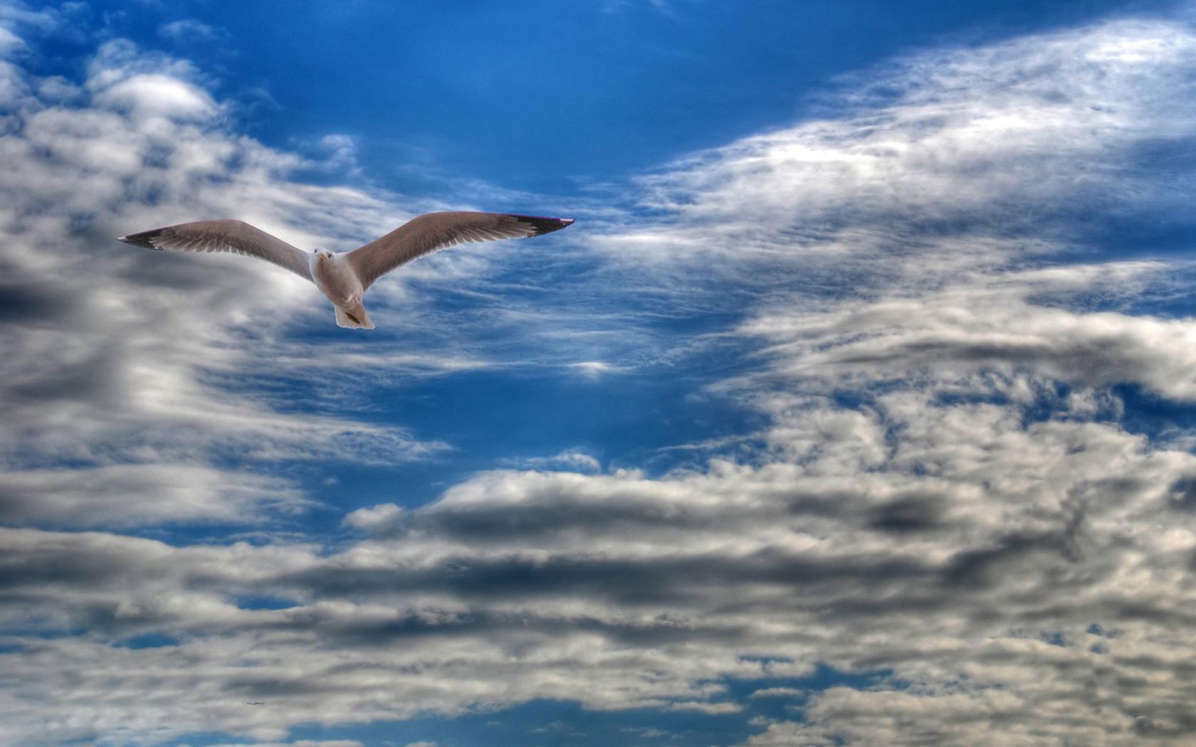 внутренних картинки летать в небе как птицы улыбкой позировала