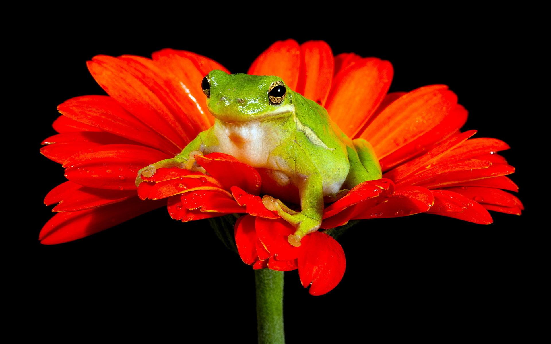 жаба лист фон  № 3164668  скачать