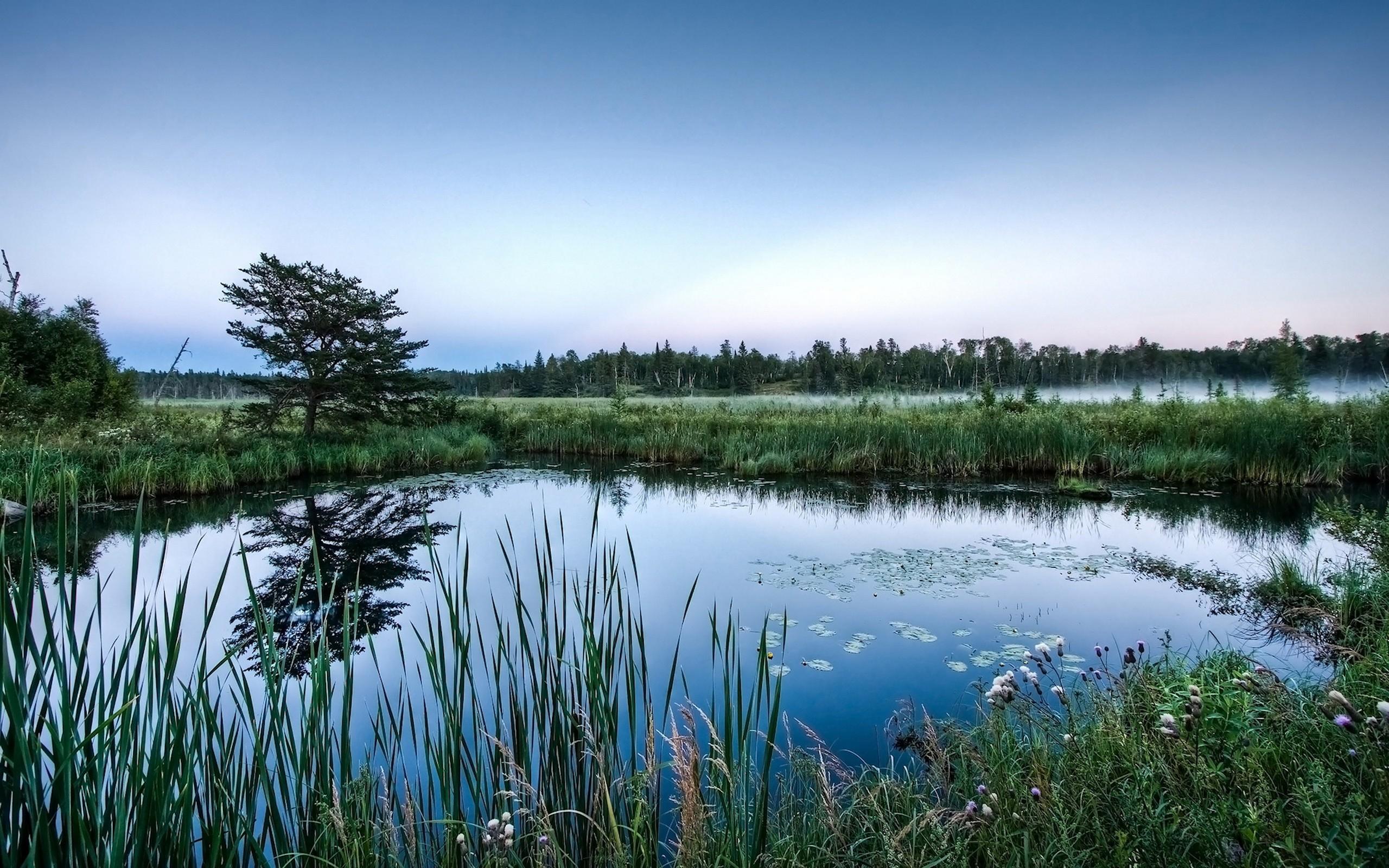 природа деревья небо озеро трава вода скачать
