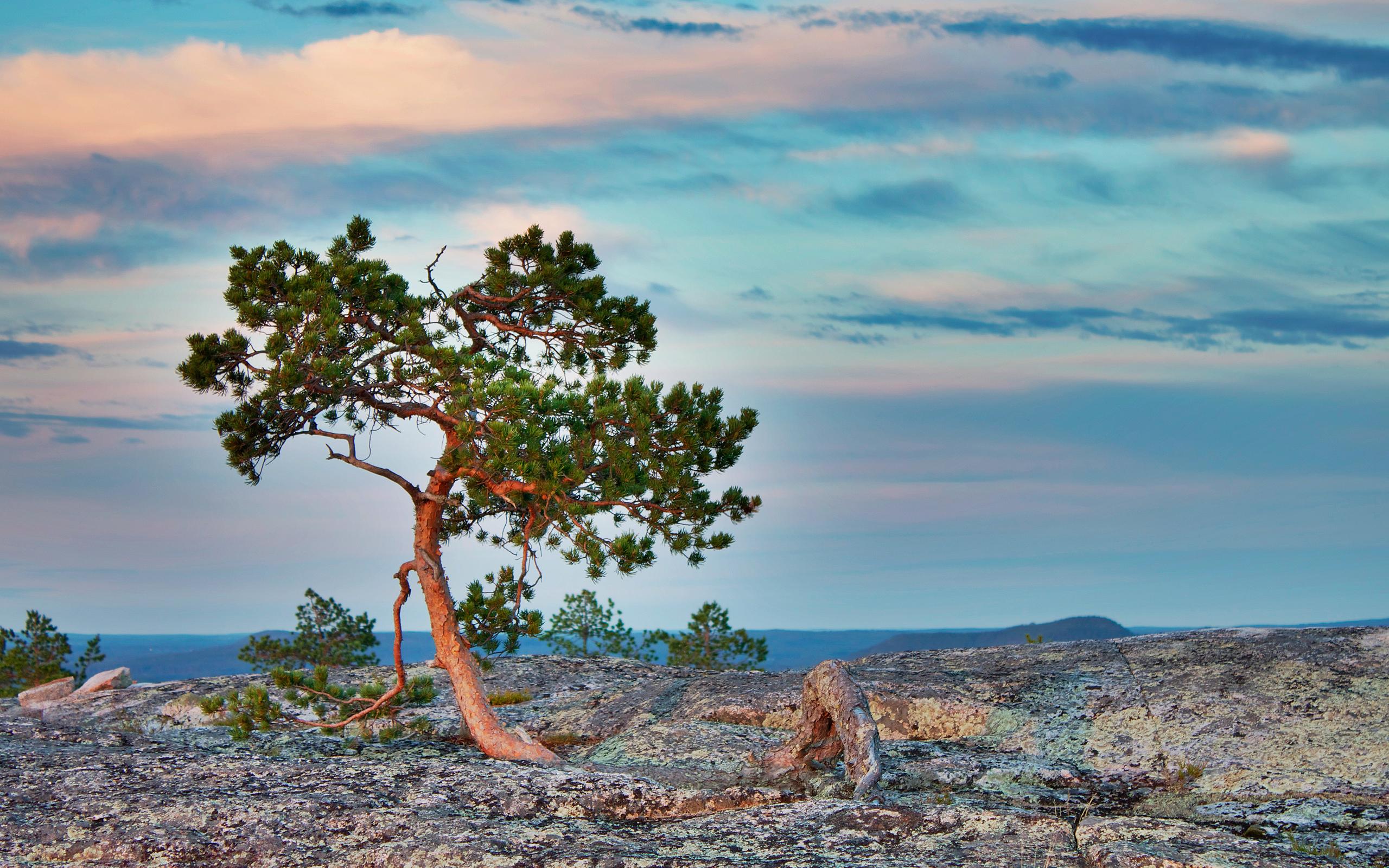 природа море деревья камни скалы  № 38402  скачать