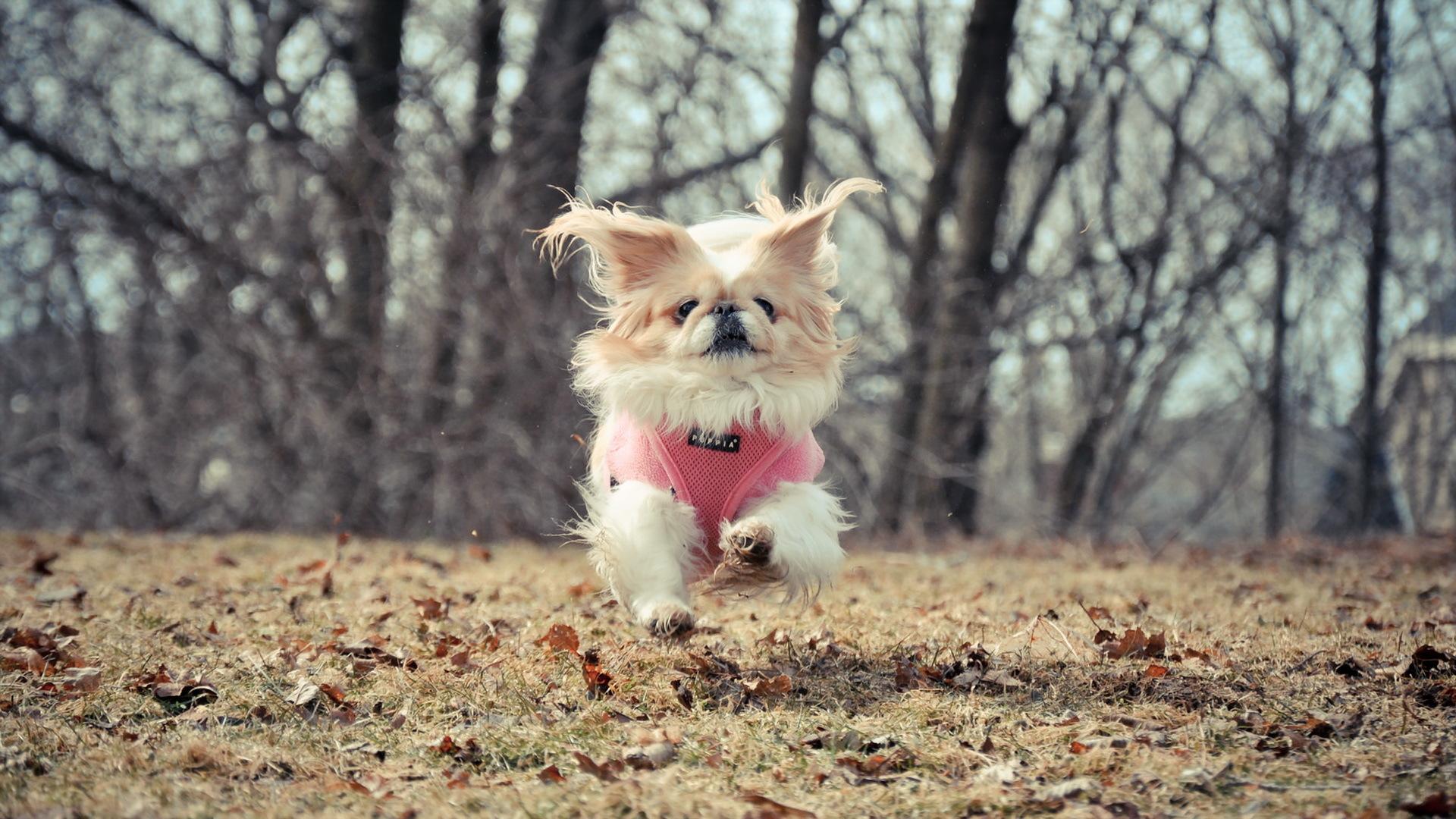 Мчащийся собачка скачать