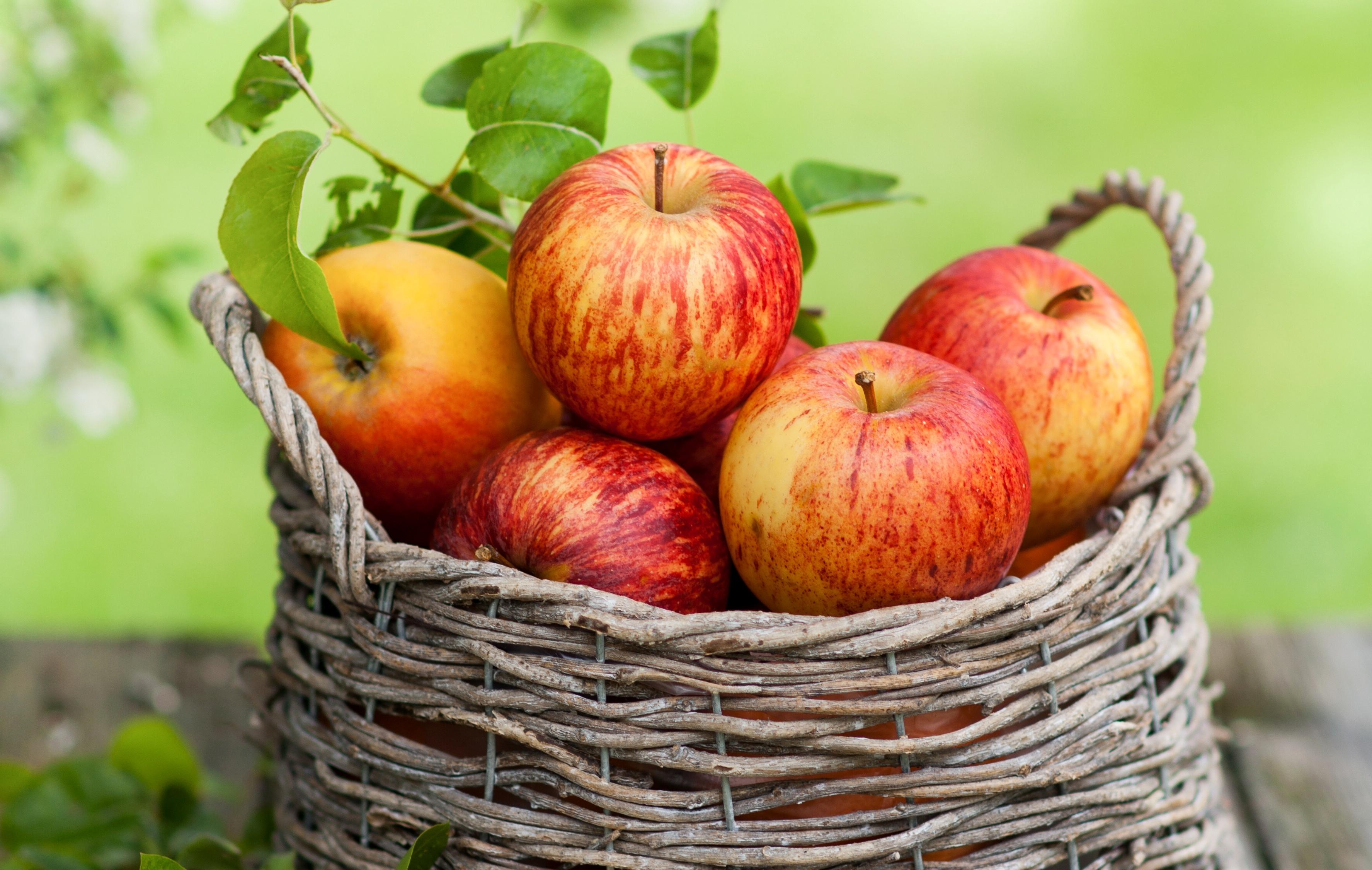 яблоки  № 164374 бесплатно