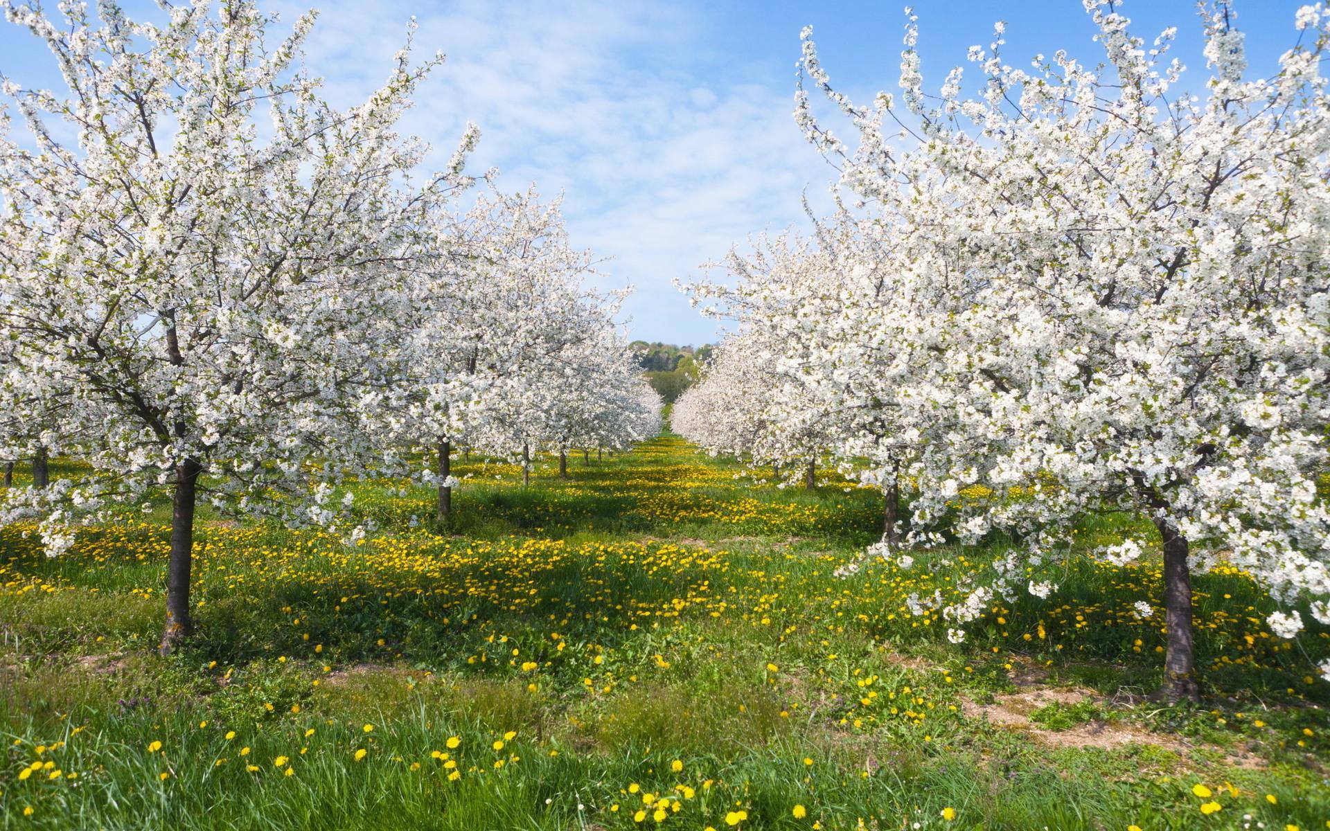 природа деревья цветы бесплатно