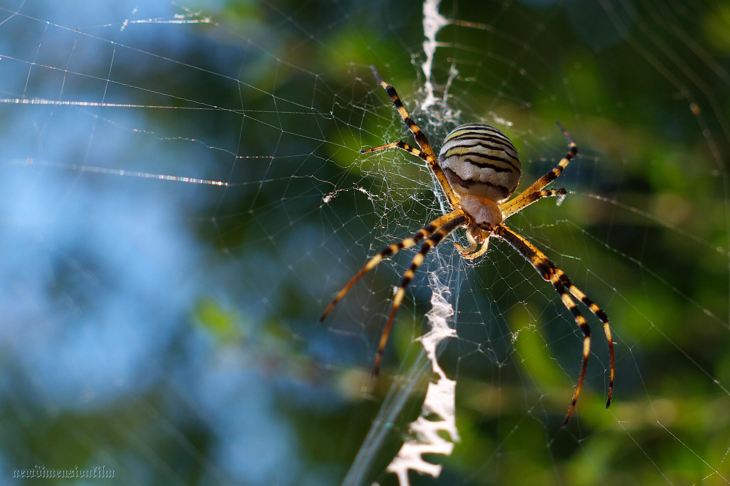 говорить толщине, красивые названия пауков с фото действительно, это