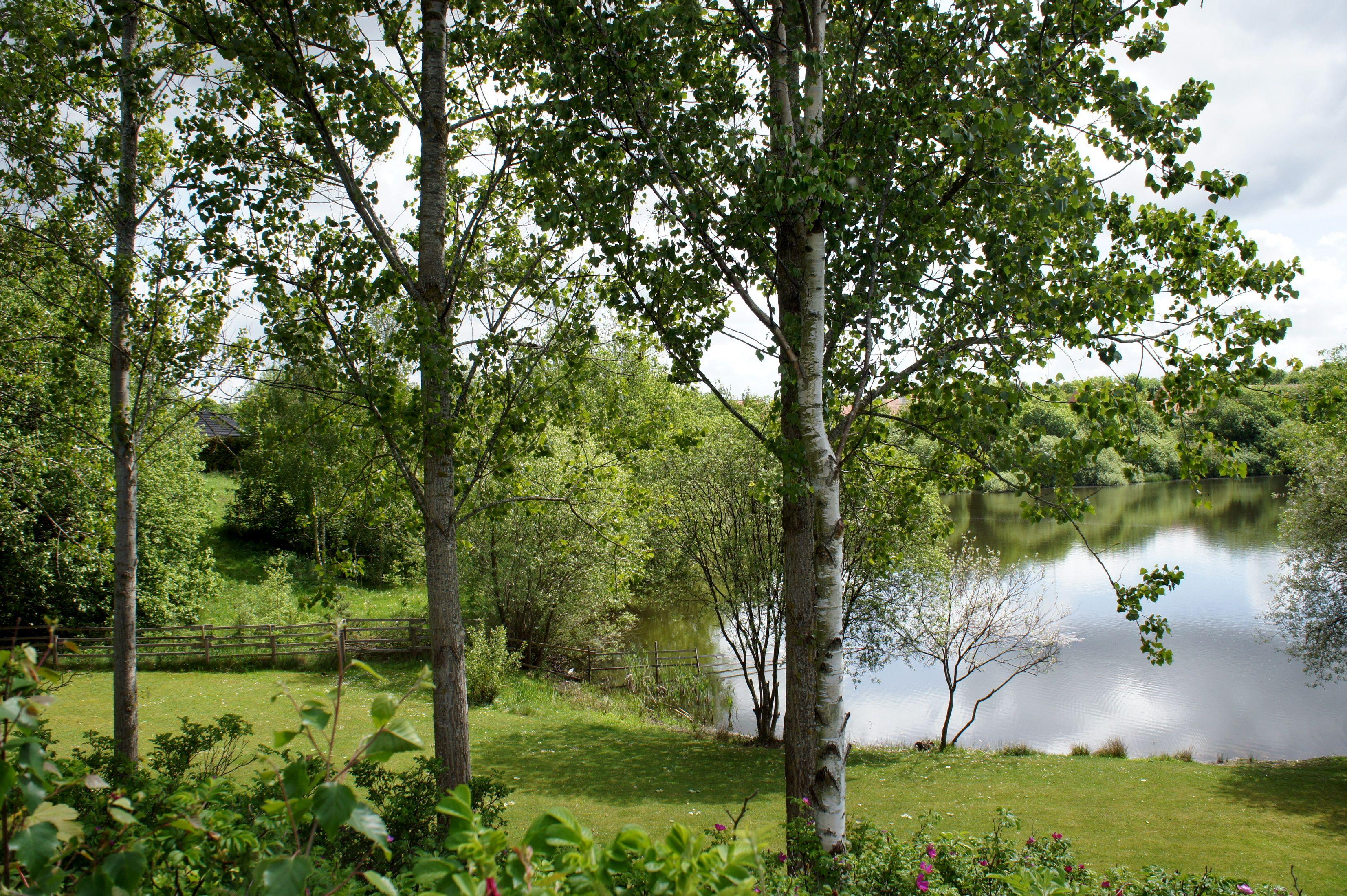 березы берег озеро  № 1195383  скачать