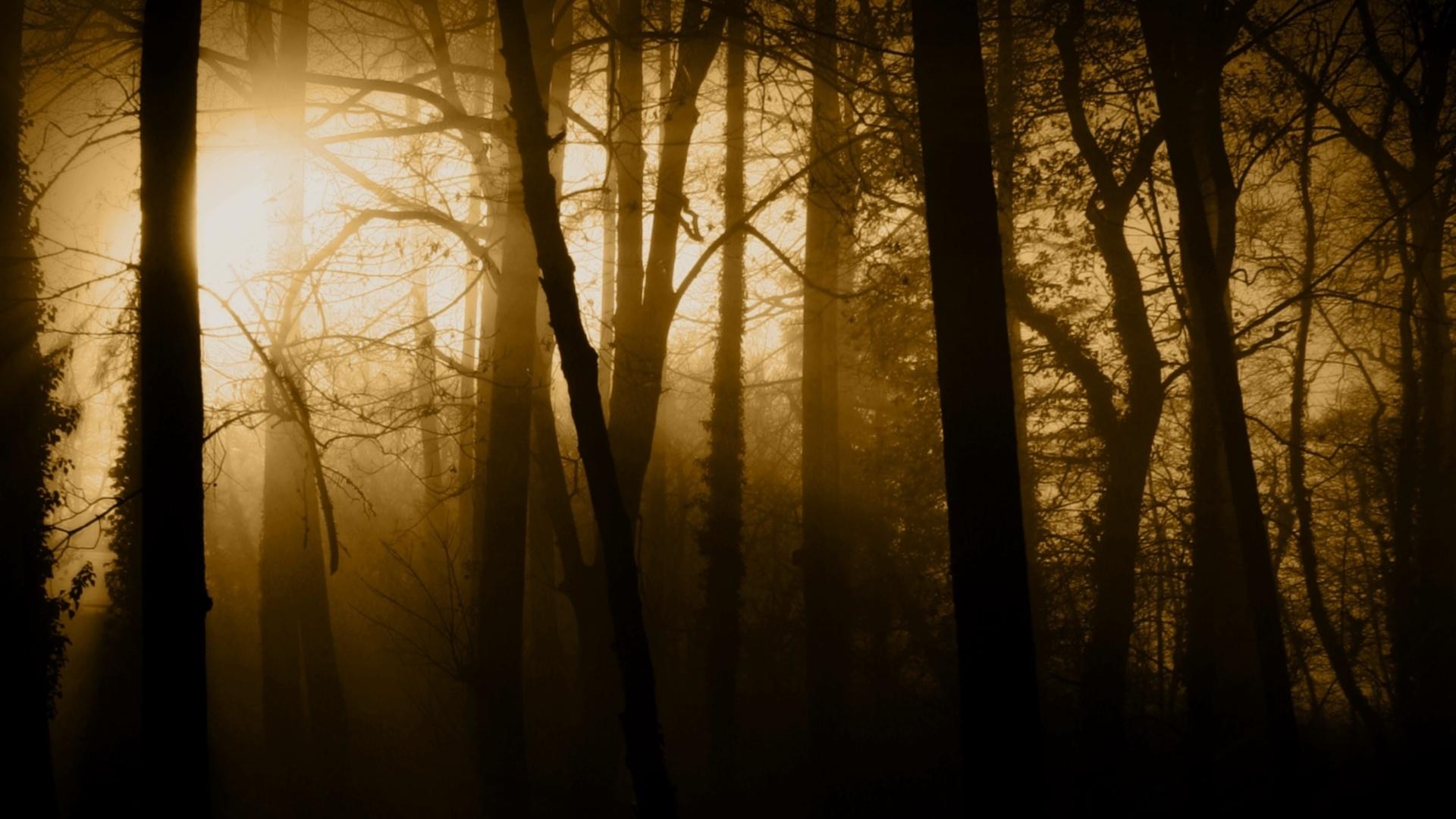 Поворот в темном лесу на телефон