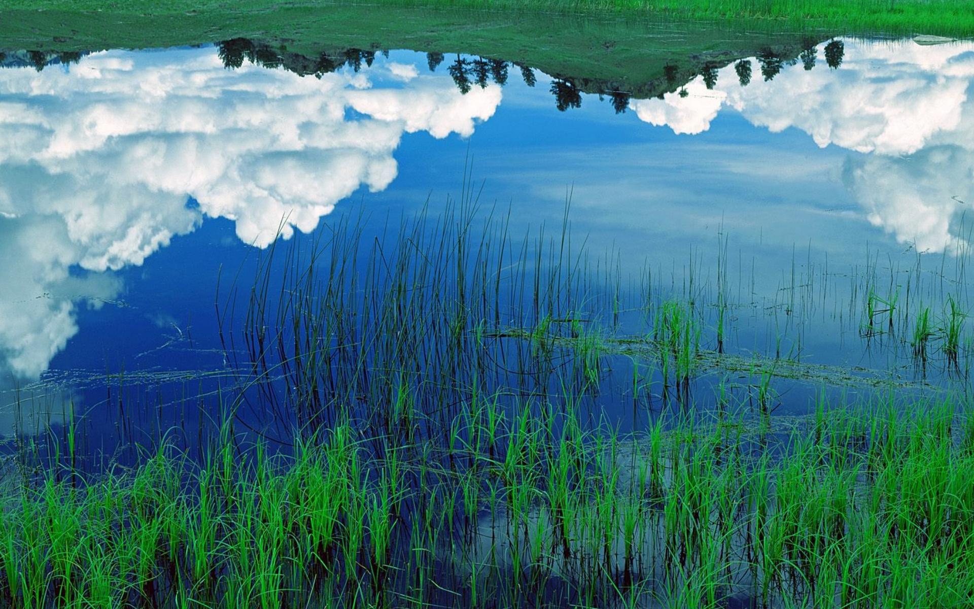 Облака, трава, цветы, озеро  № 1963148 бесплатно