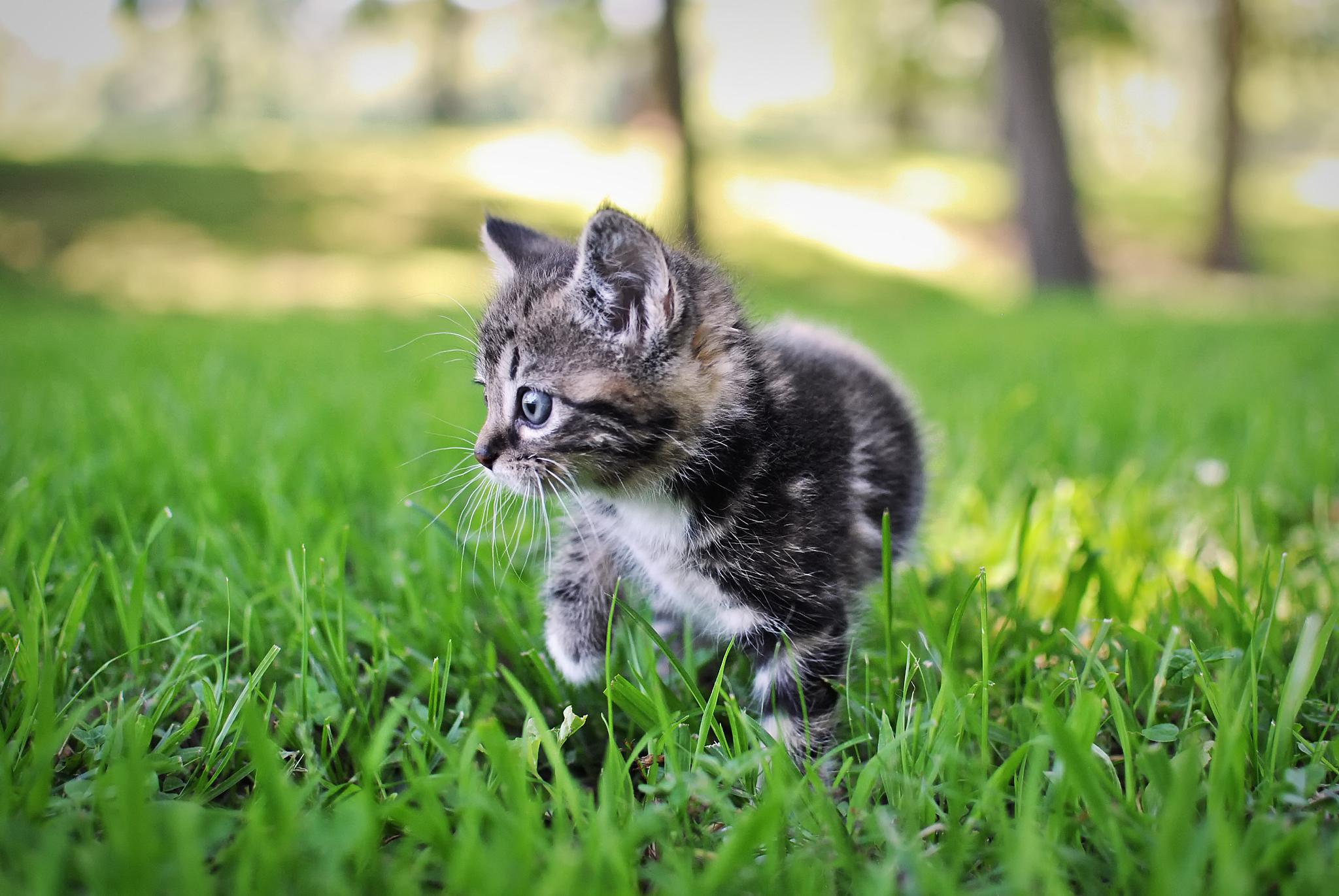 Котенок играющий с кошкой в траве  № 1994930 загрузить