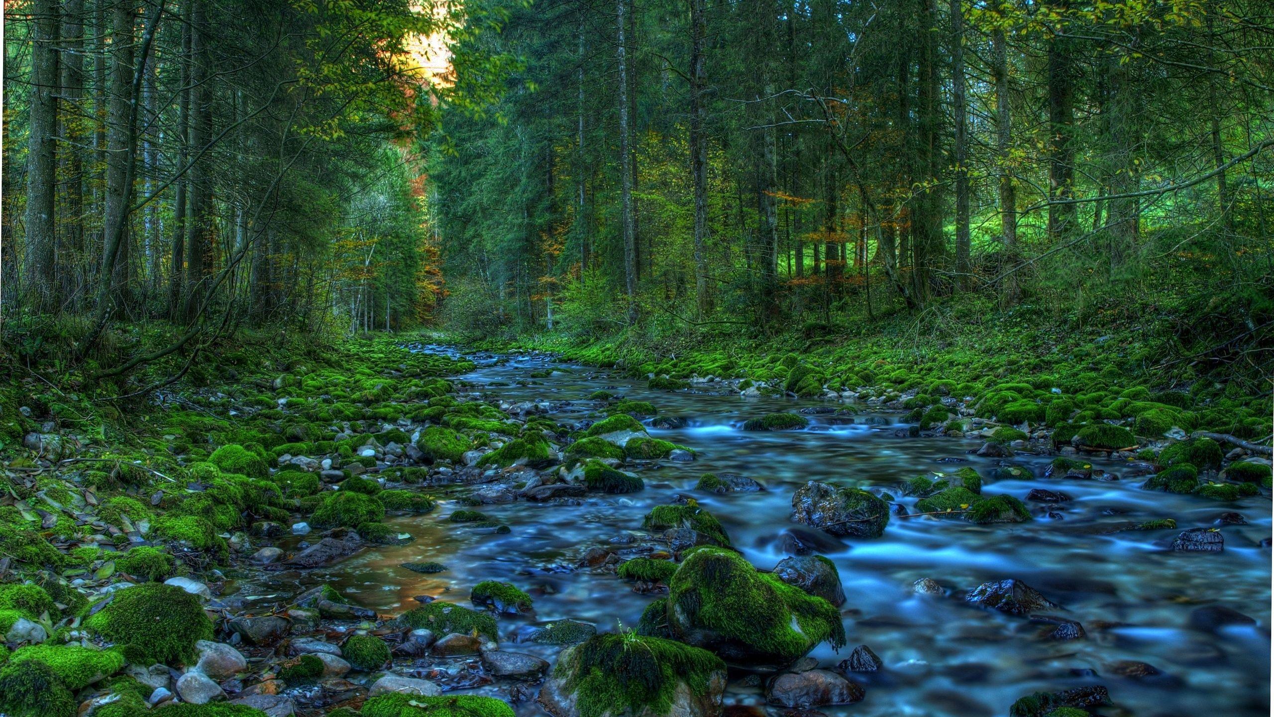 лесной ручей  № 1489872 без смс