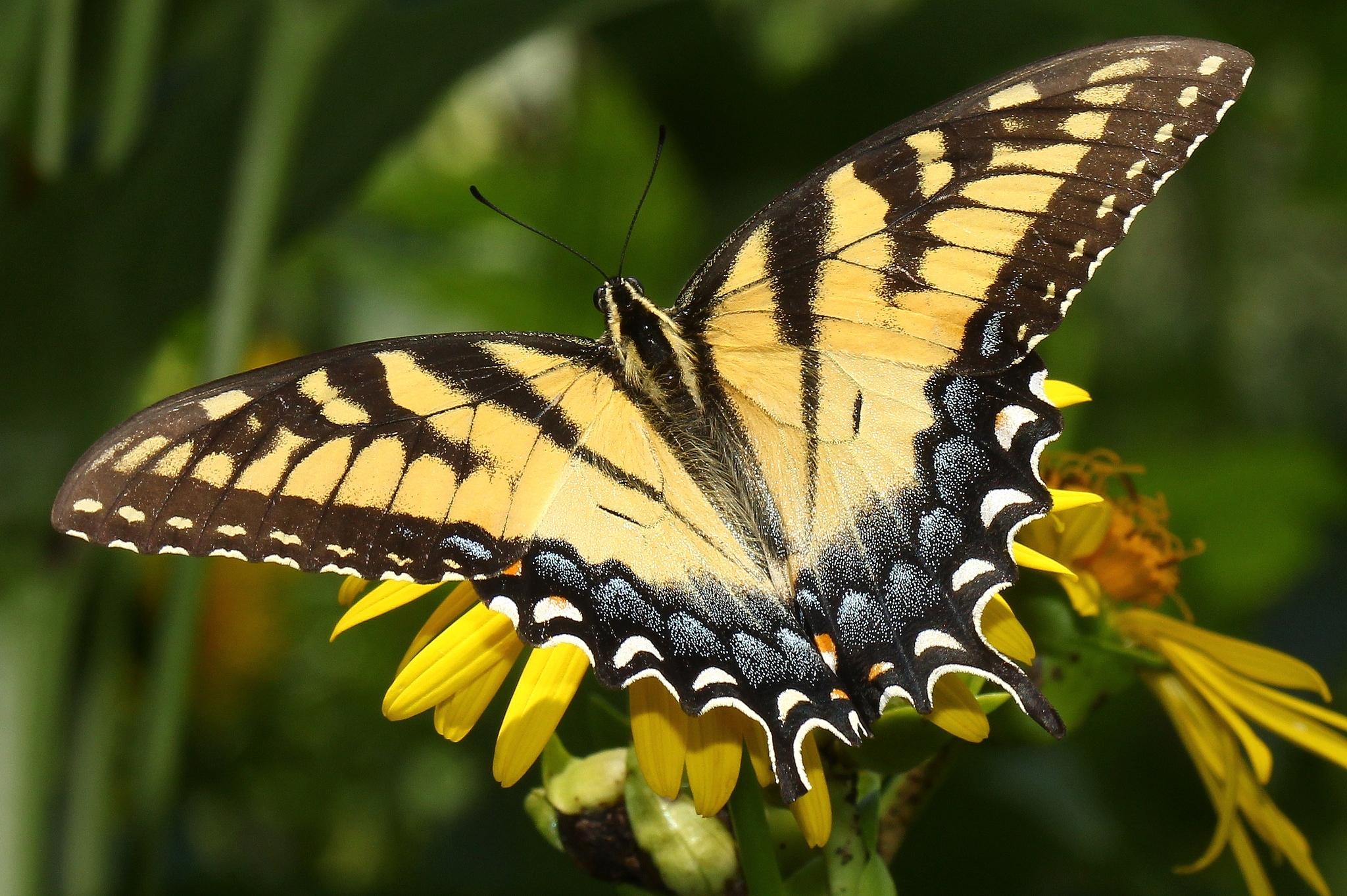 природа животные насекомое макро бабочки nature animals insect macro butterfly бесплатно