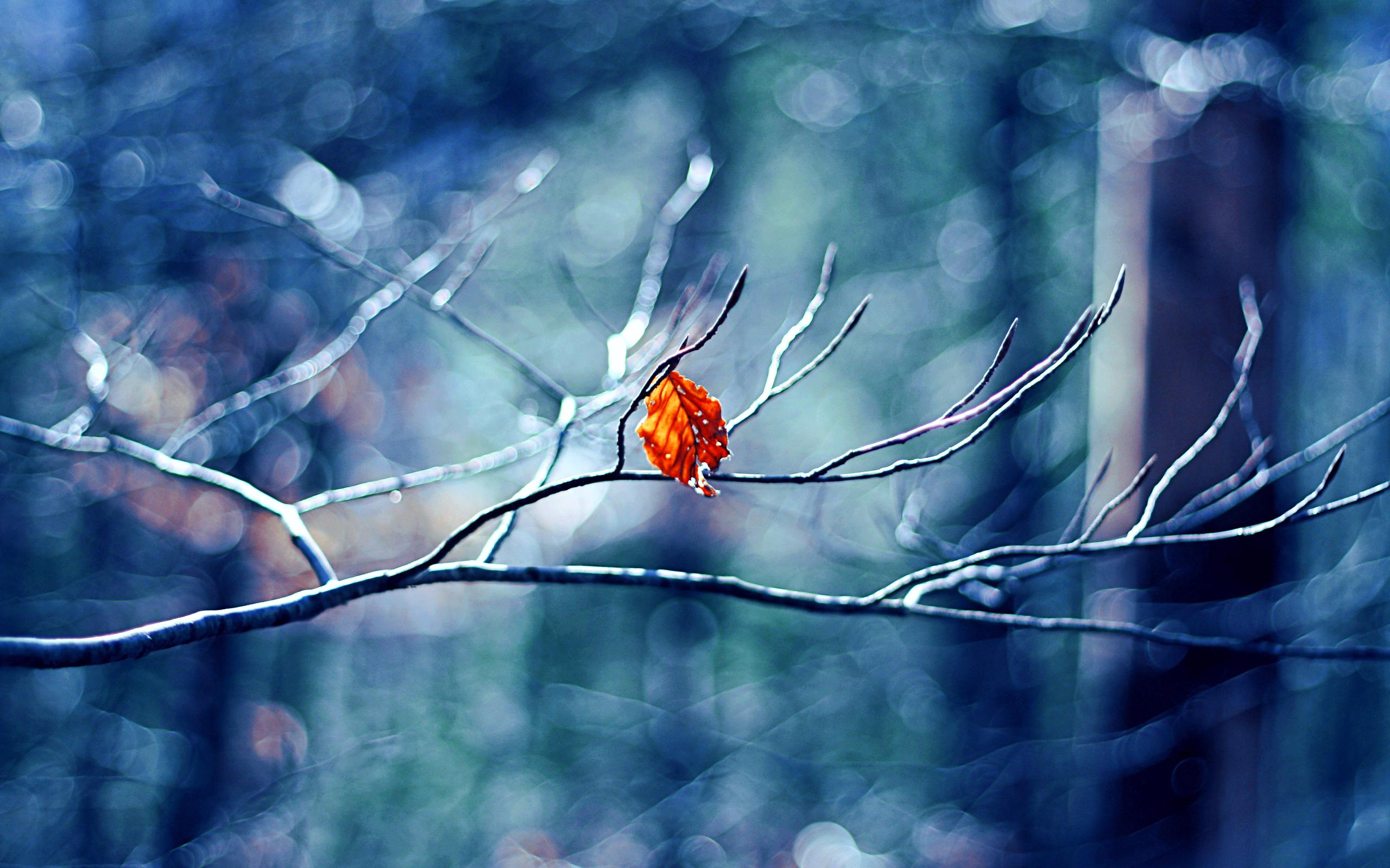 зима листья ветка природа без смс