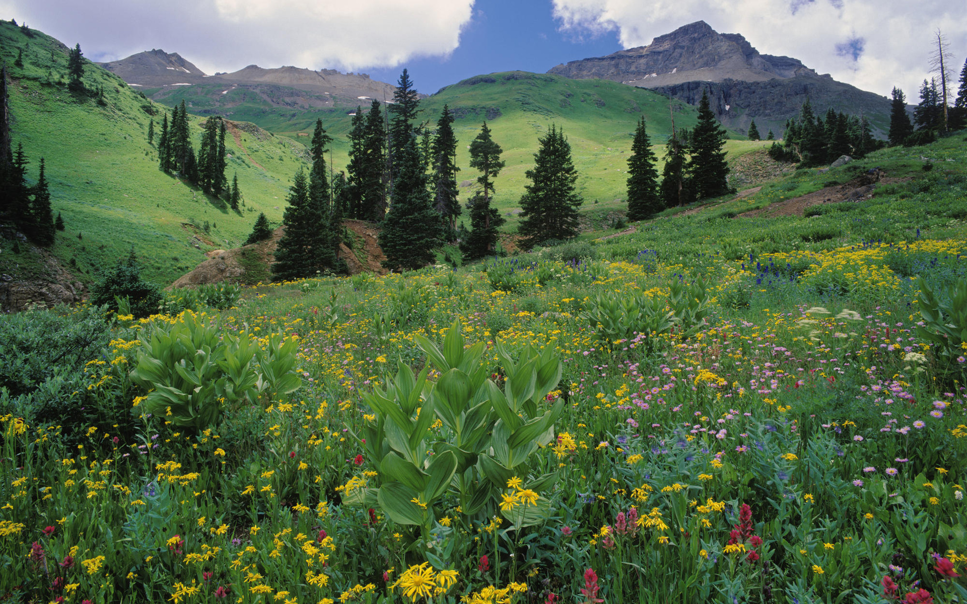 горы, ели, цветочная поляна  № 3587028 бесплатно