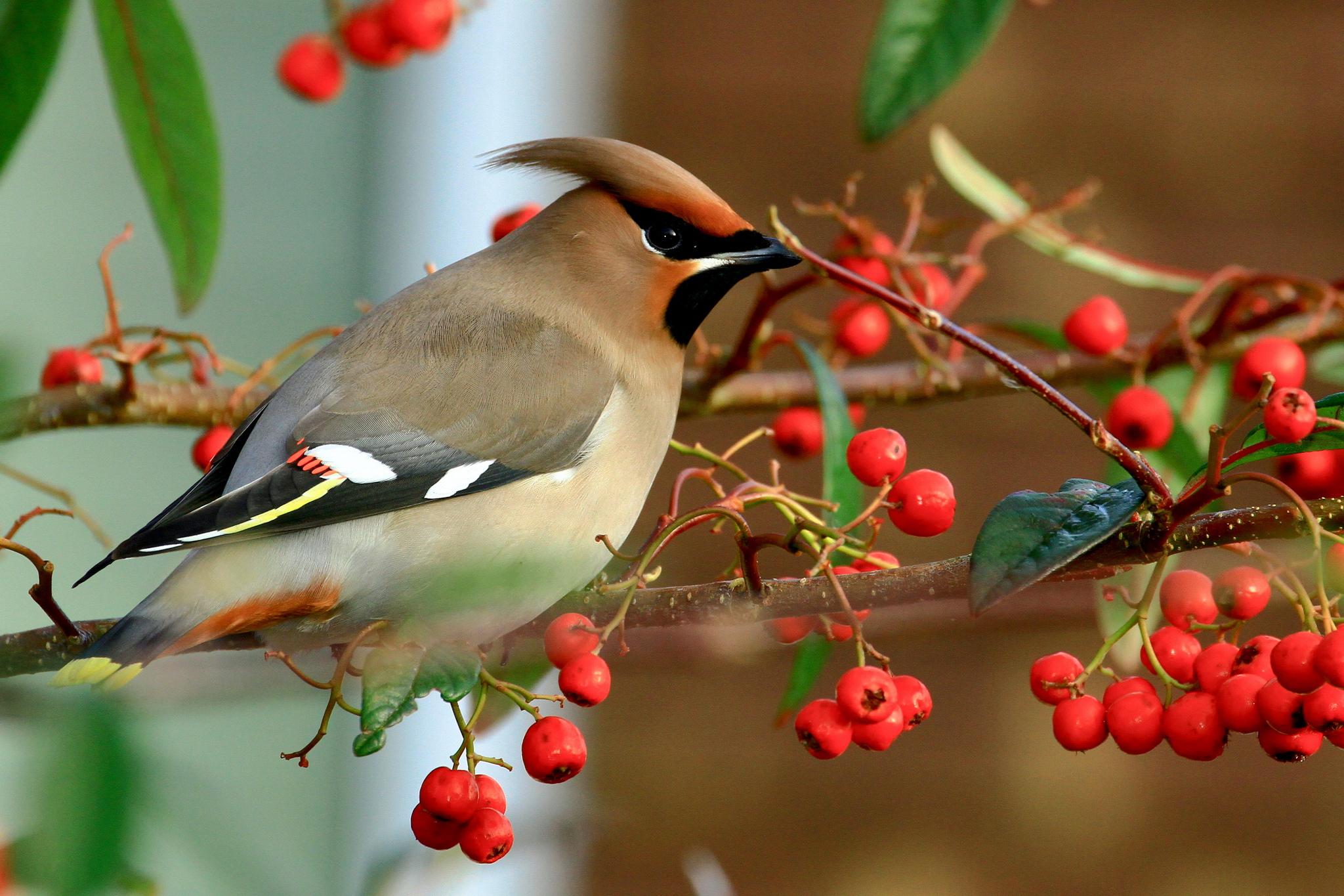 Картинки природы животных и птиц, картинки одиночество картинки