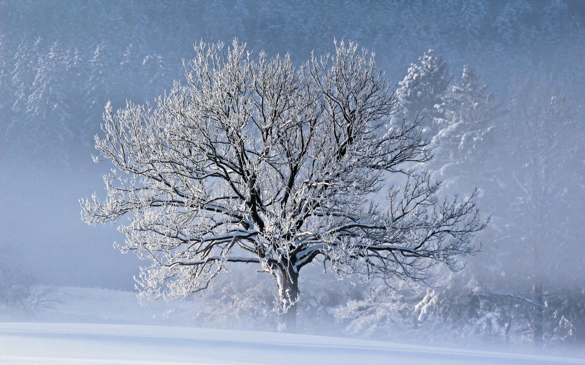 Сделать, картинка с деревьями в снегу