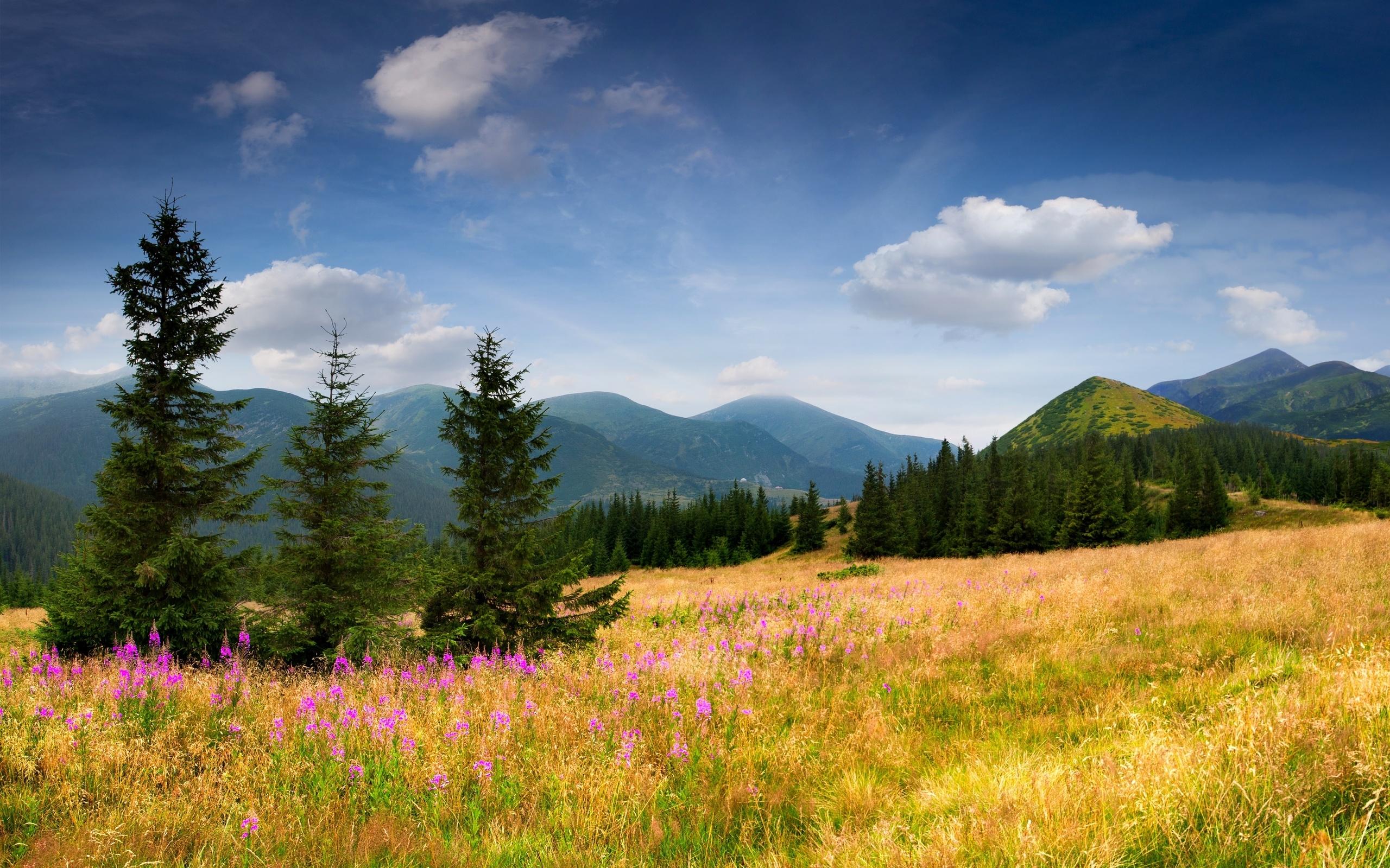 поляна цветы трава холмы горы glade flowers grass hills mountains  № 1829162 без смс