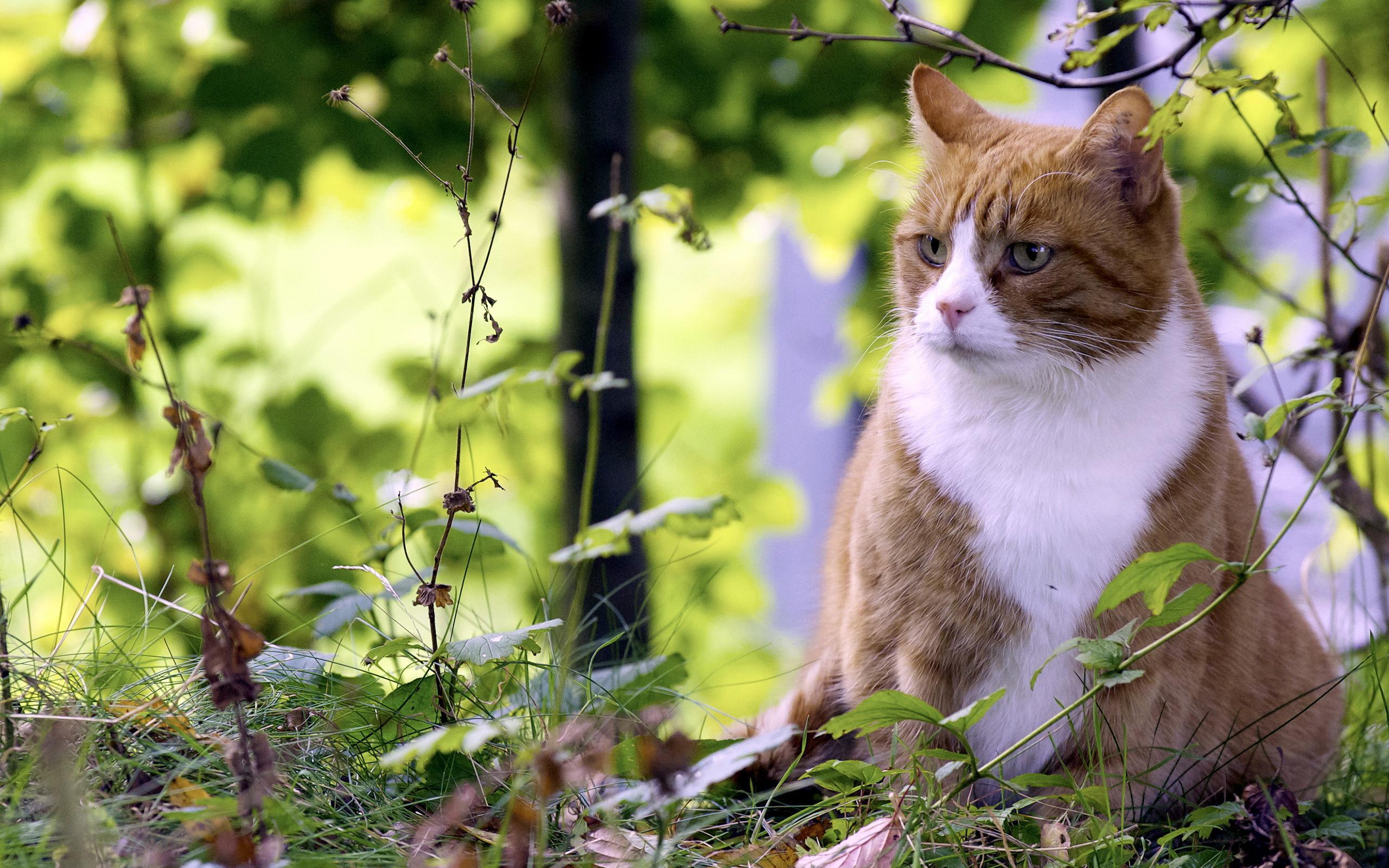 природа животное котенок кот  № 1981135  скачать
