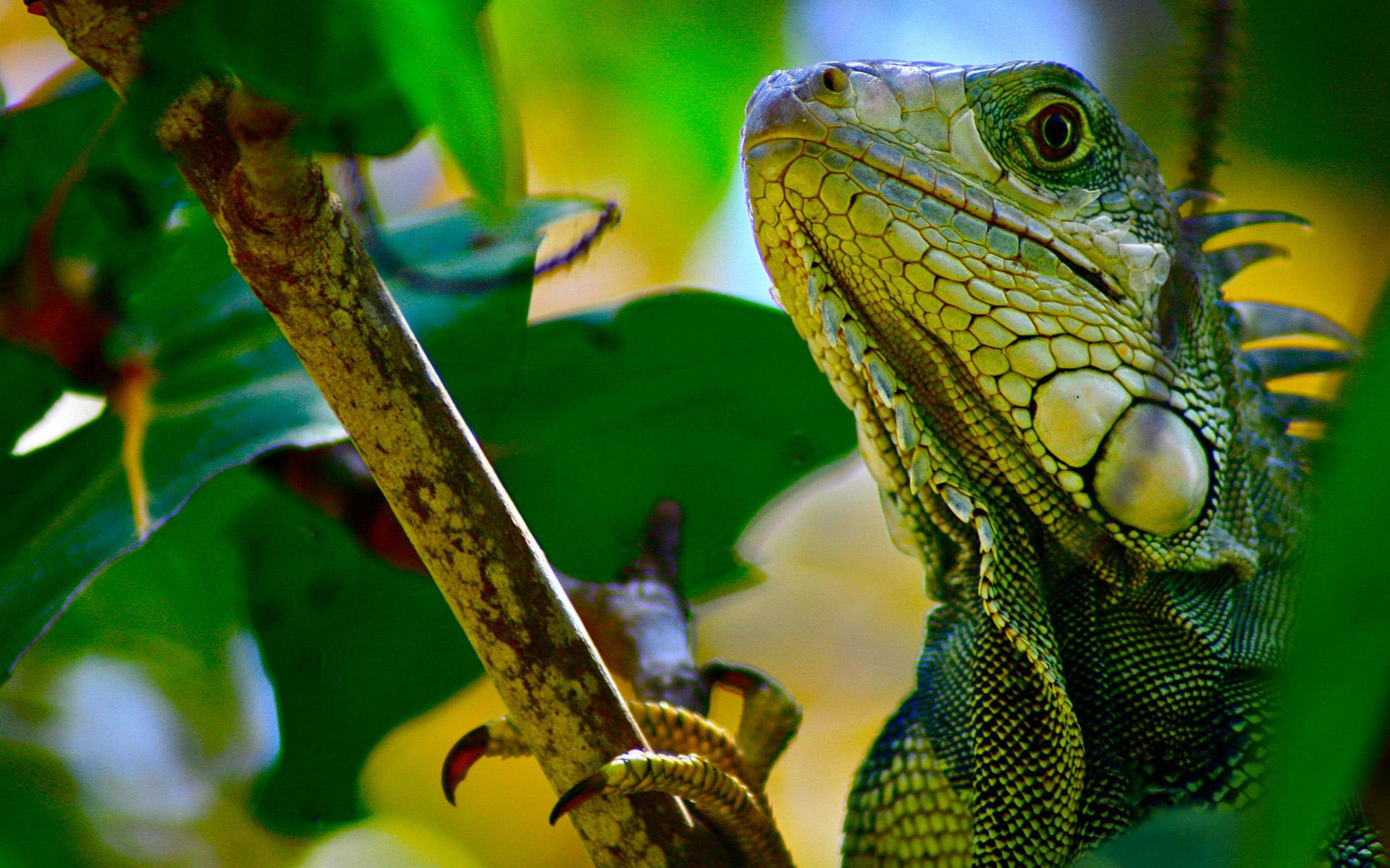 природа животные рептилия  № 234899 загрузить