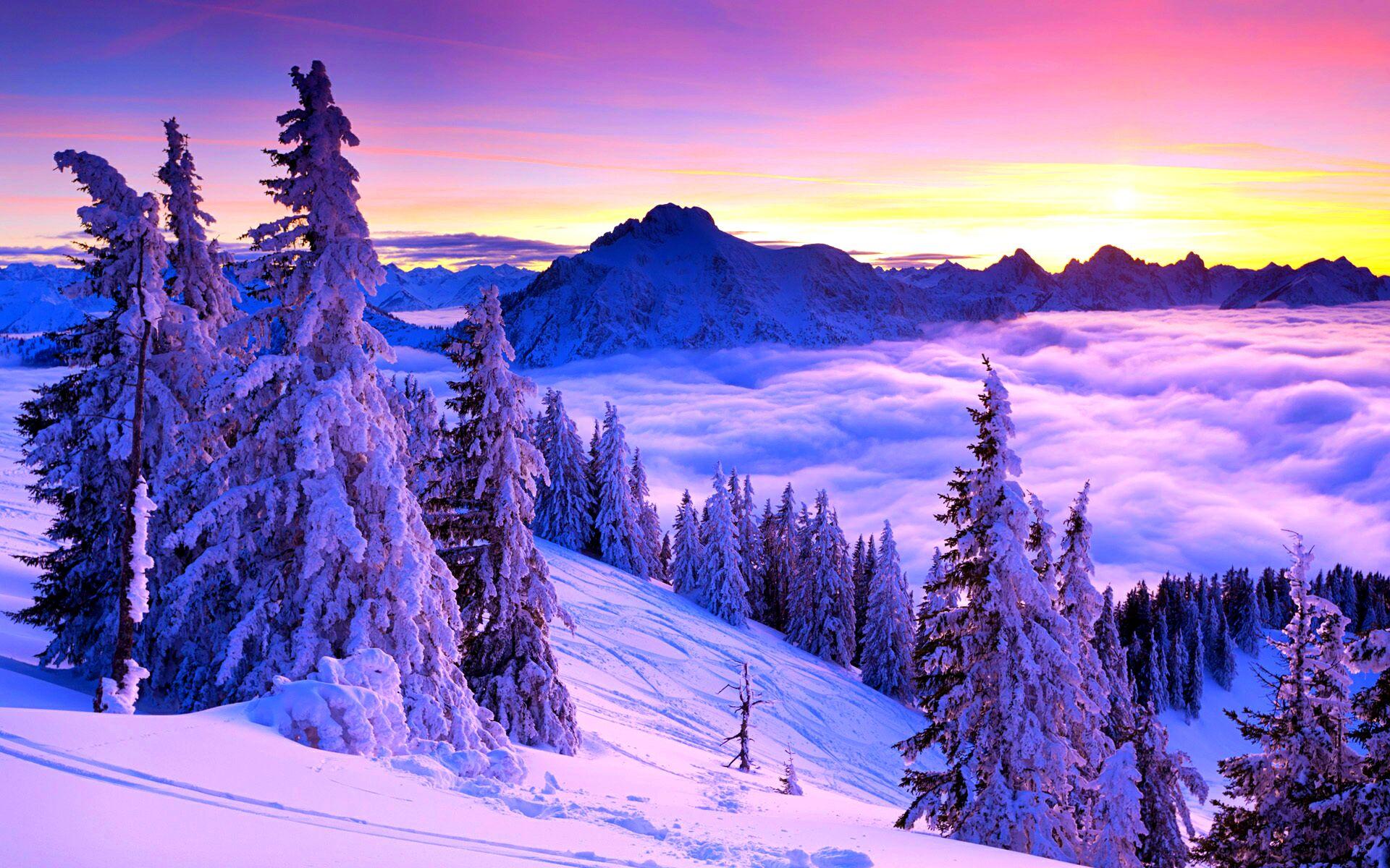 природа деревья ели зима снег небо  № 2803205  скачать