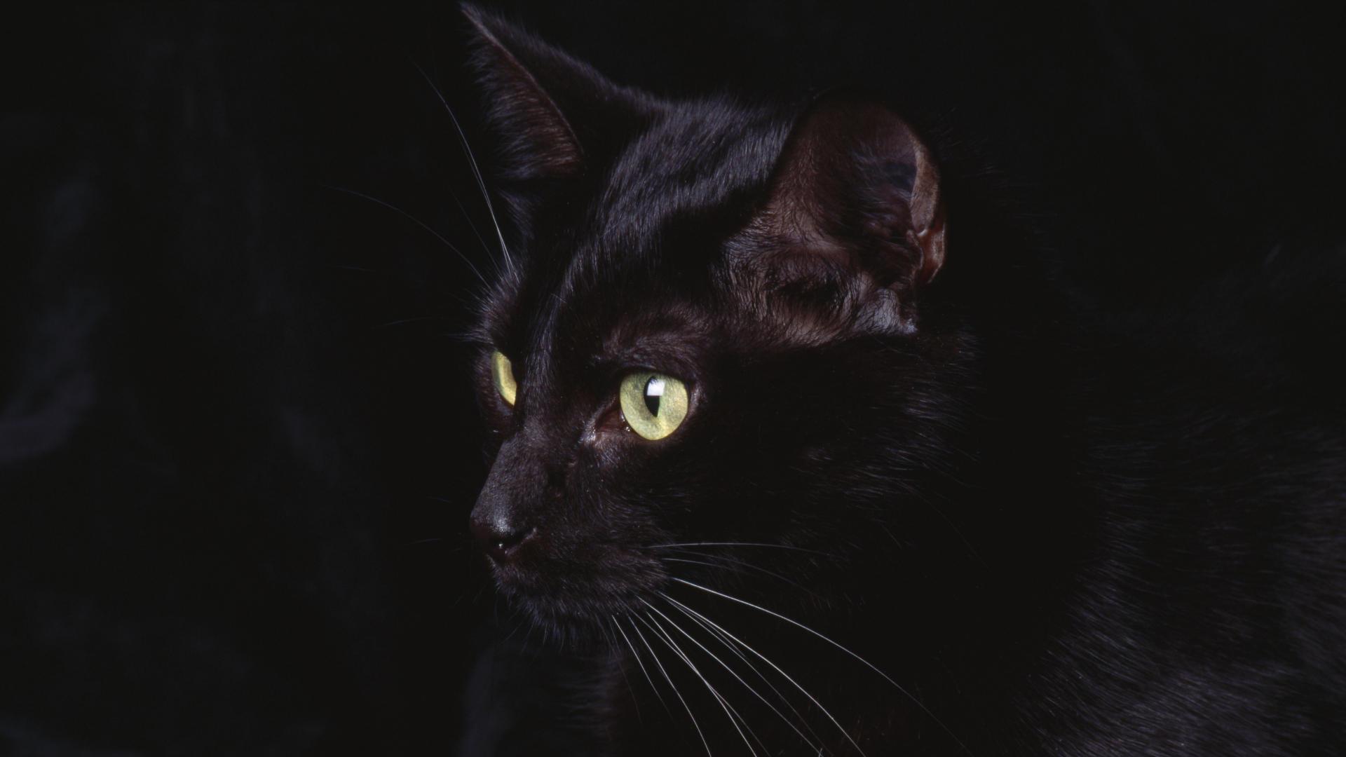 черный кот глаза пол без регистрации