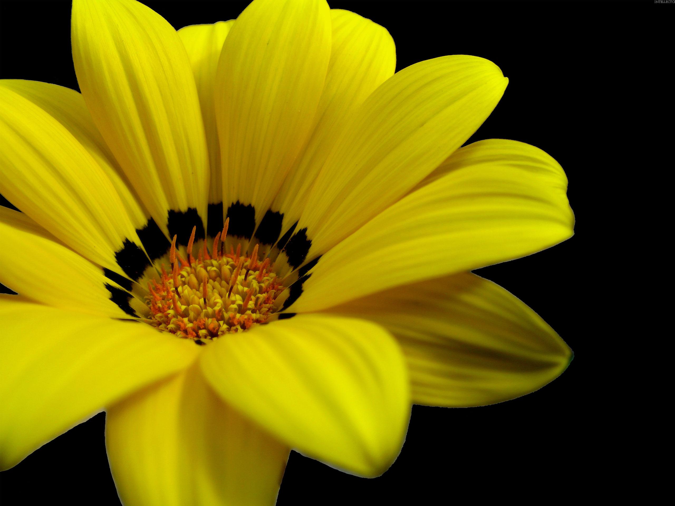 Желтый цветок  № 671099 загрузить