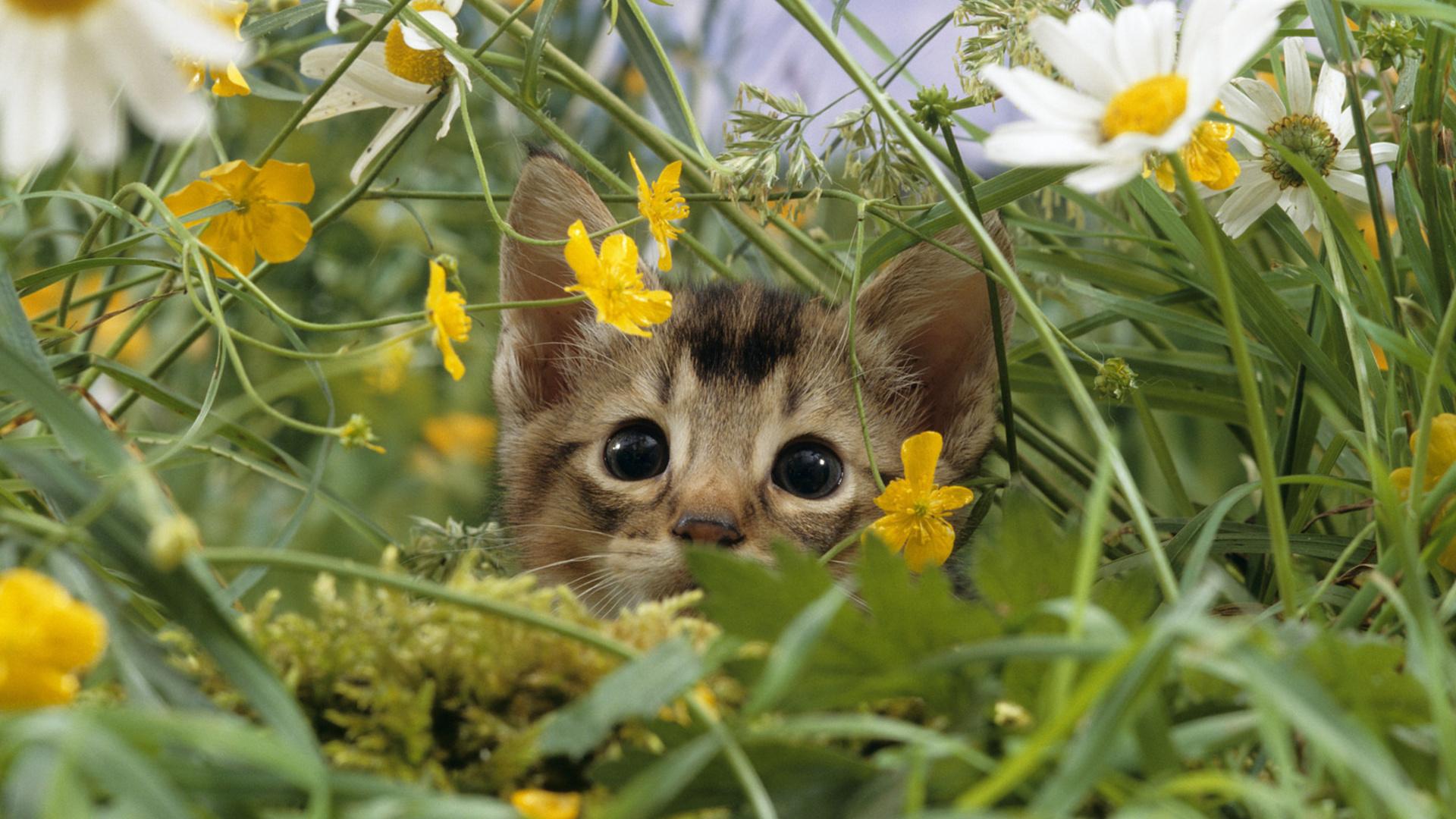 Котенок с ромашками скачать