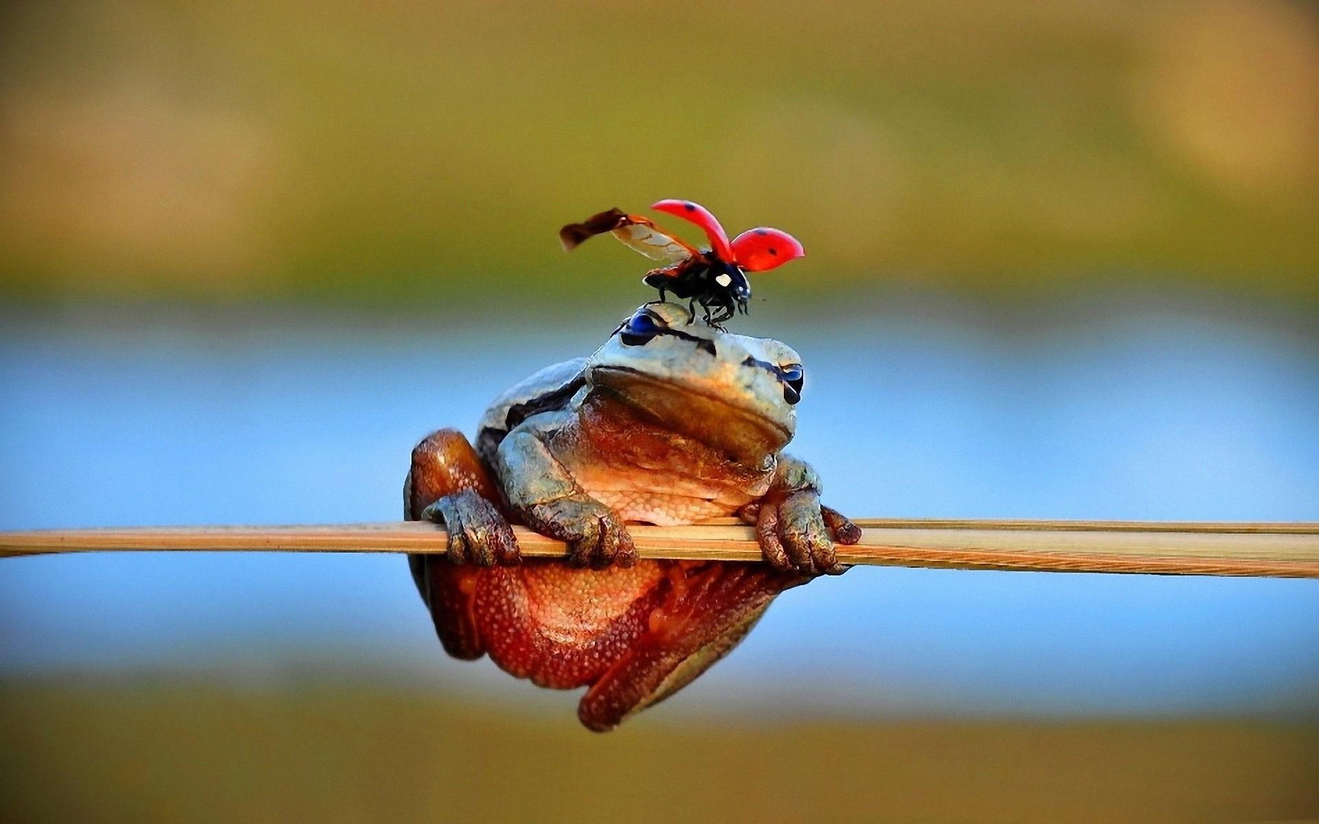 Мун, приколы картинки с насекомыми