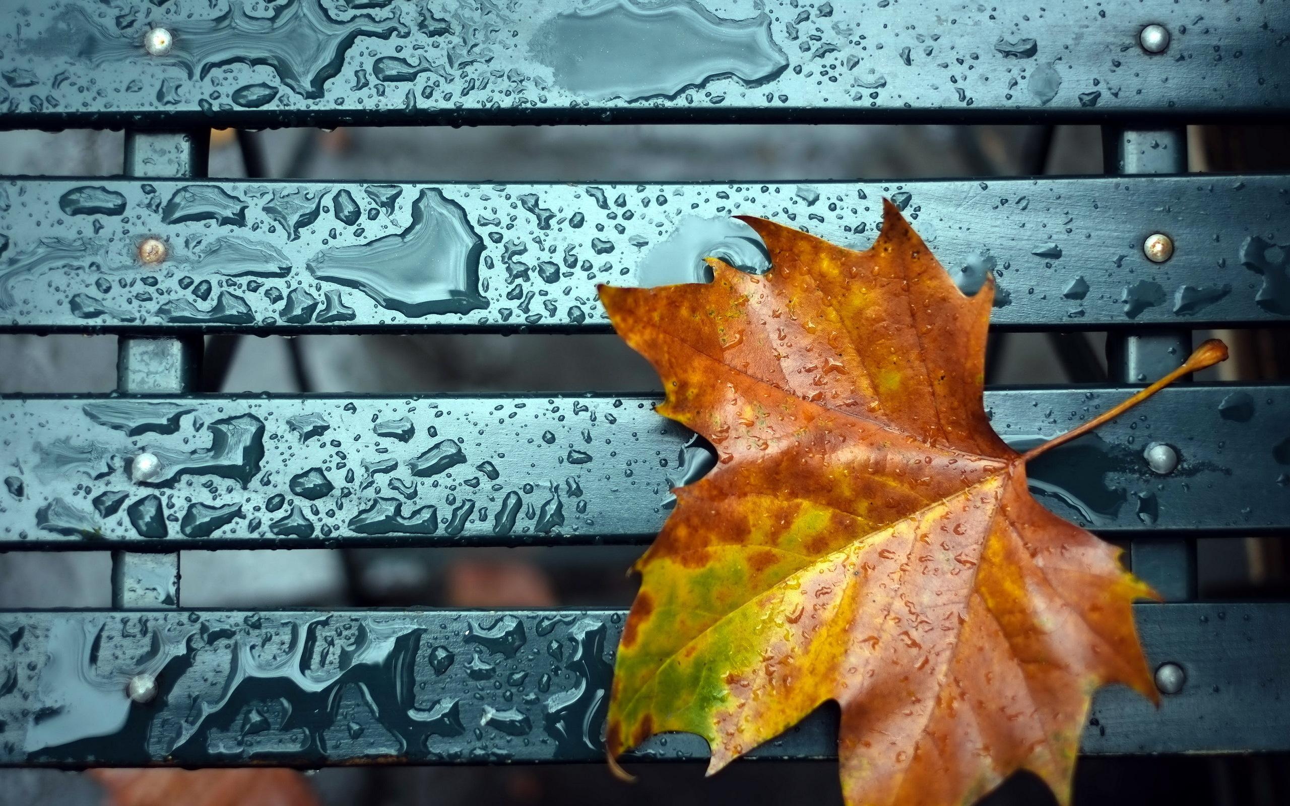 Осень листья лавка стол  № 3187432 без смс