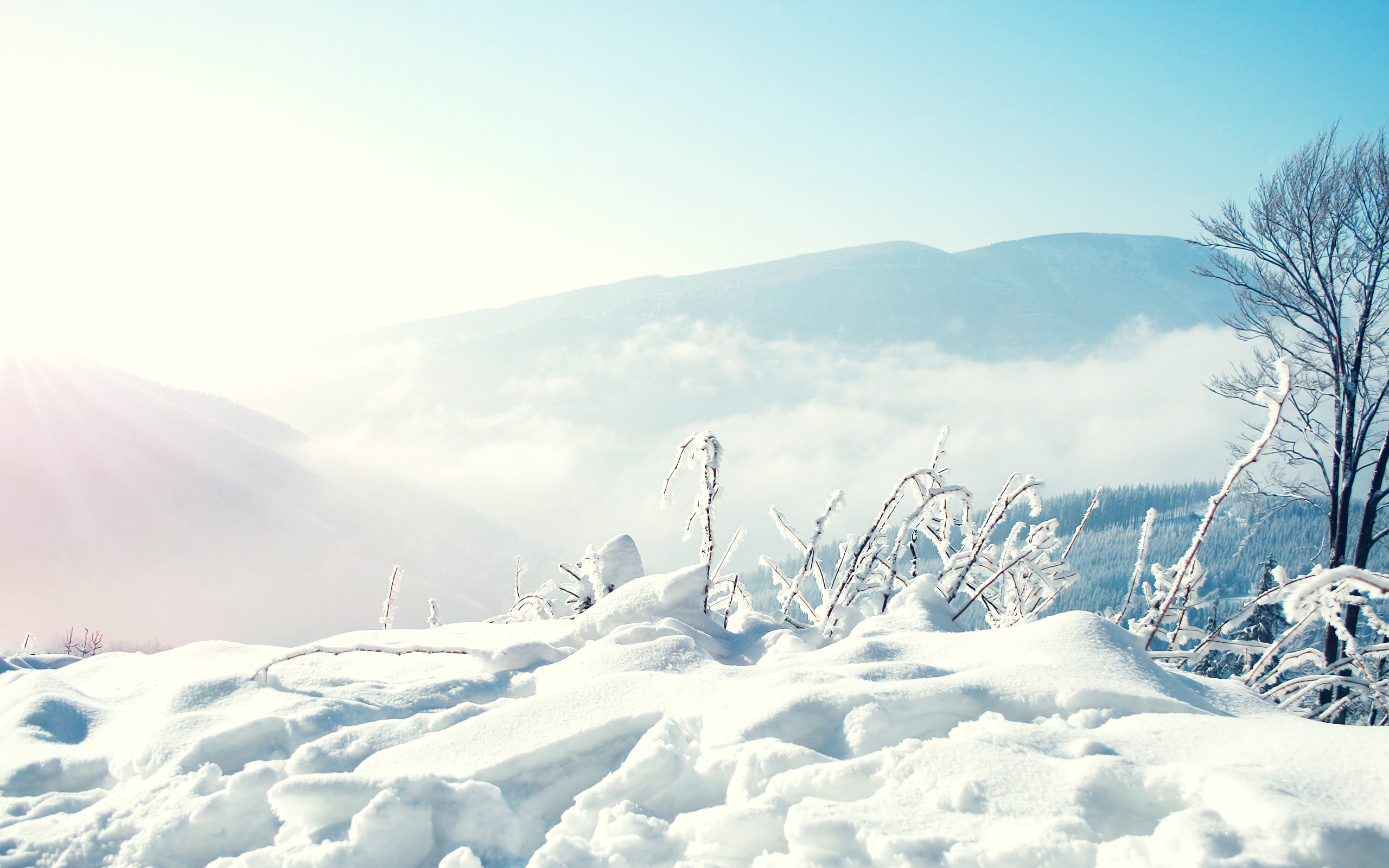 снег ели гора snow ate mountain  № 2479222  скачать