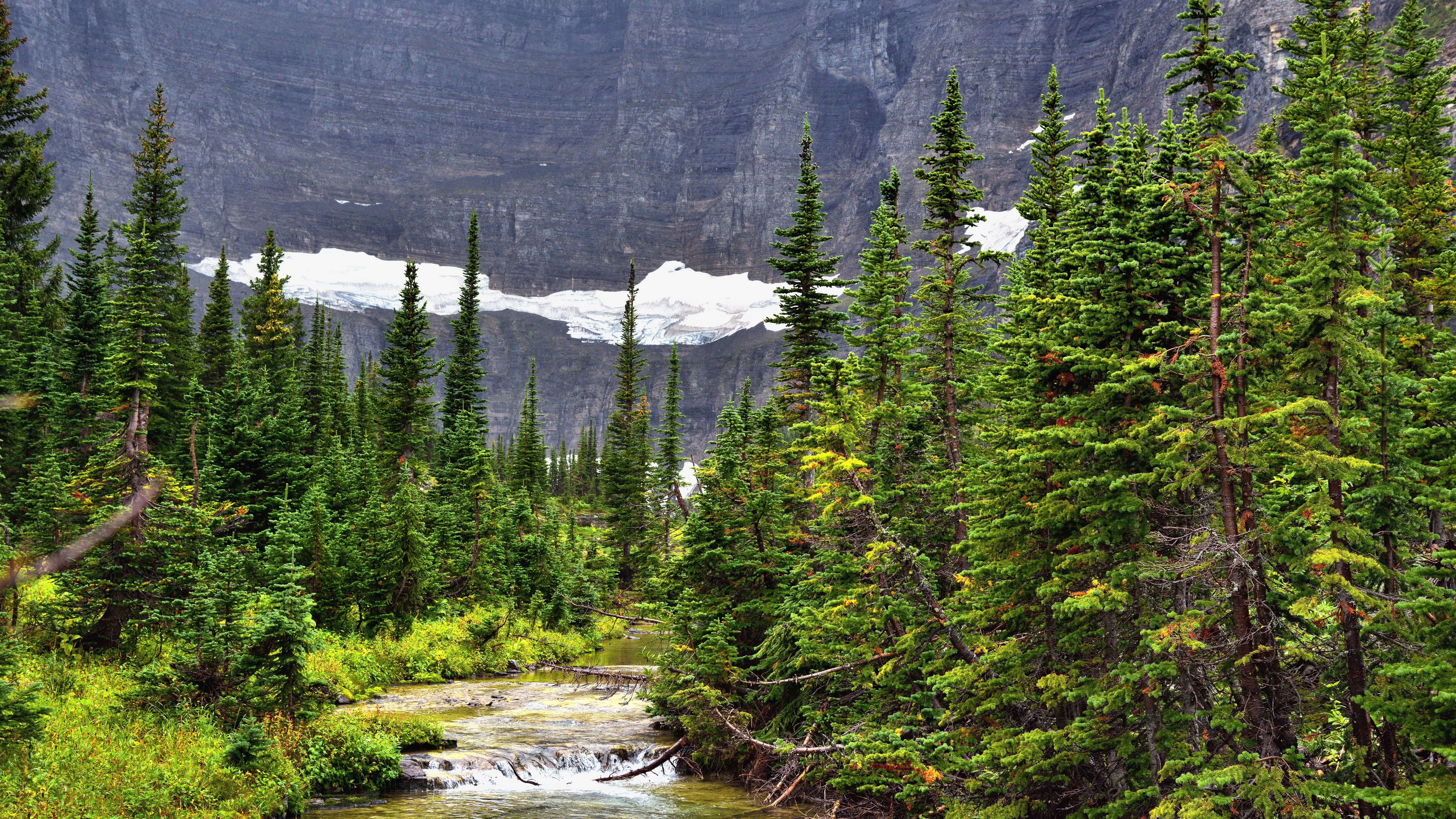 ель горы spruce mountains загрузить