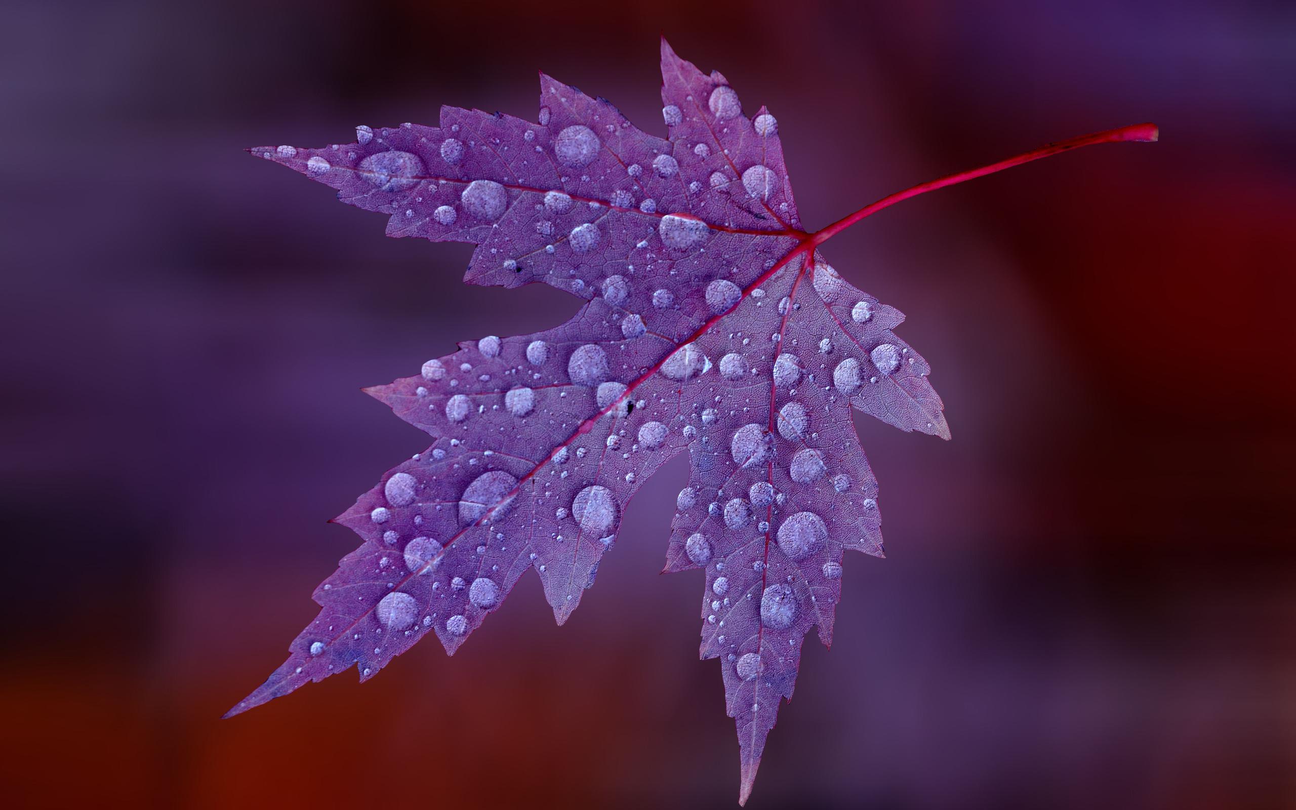 листья капли скачать