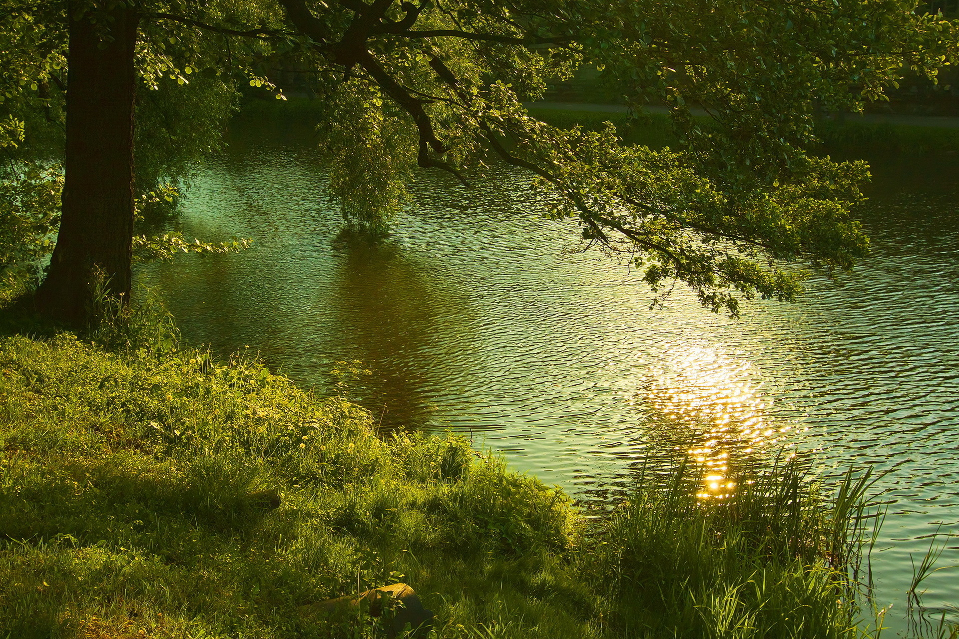 река деревья трава природа без смс